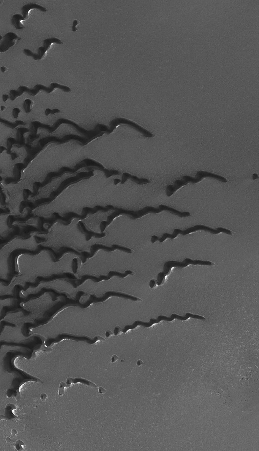 NASA's Mars Global Surveyor shows a suite of dunes in one of the several north polar dune fields. The bright surfaces adjacent to some of the dunes are patches of frost