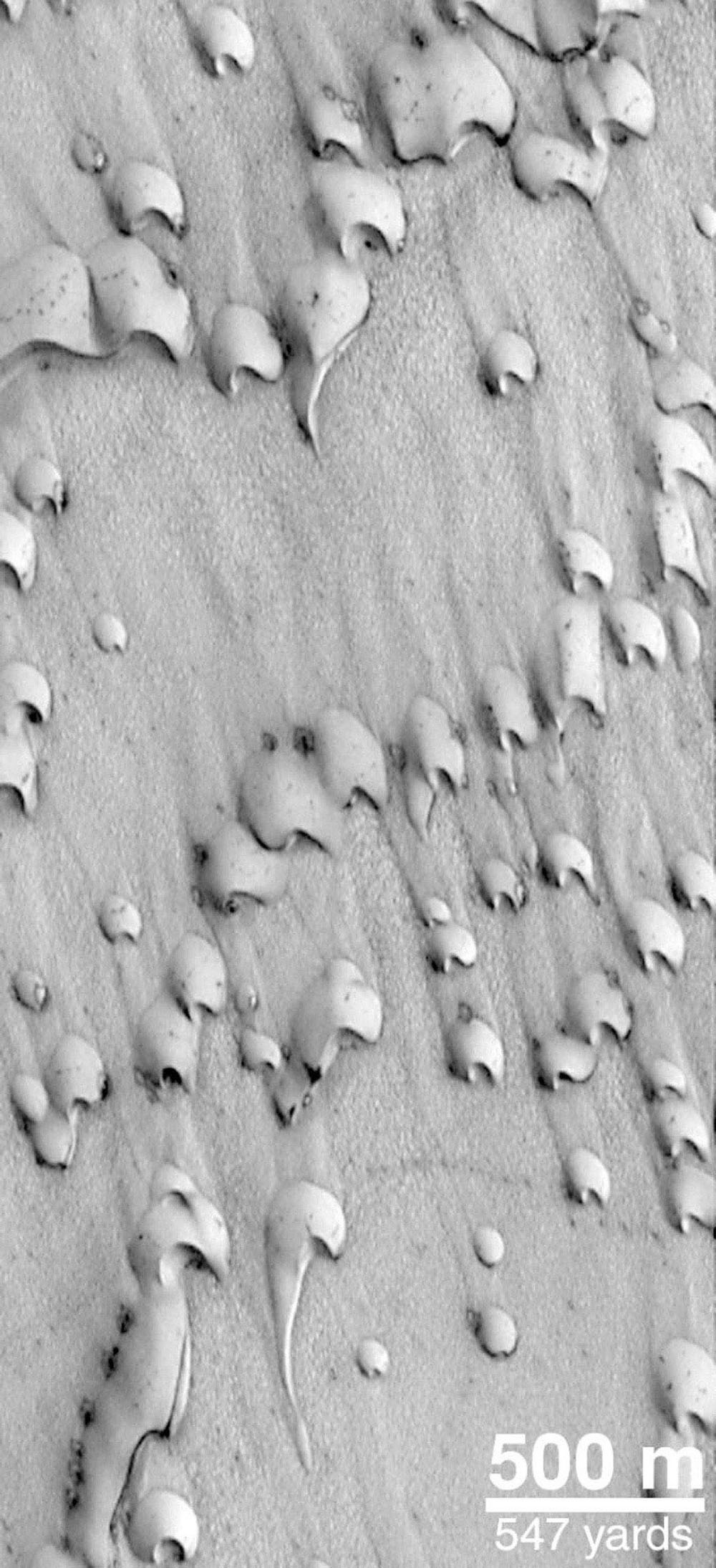 NASA's Mars Global Surveyor shows dunes in Chasma Boreale, a giant trough in the north polar cap. This September 1998 view shows dark sand emergent from beneath a veneer of bright frost left over from the northern winter that ended in July 1998.