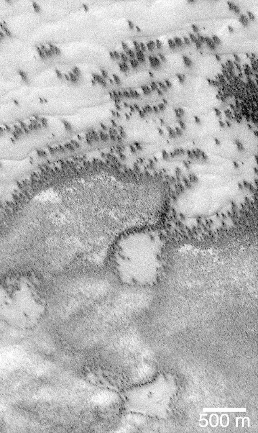 This image captured by NASA's Mars Global Surveyor (MGS) on July 21, 1999, shows polar regions on Mars during the spring and summer seasons, do indeed resemble aerial photographs of sand dune fields on Earth.