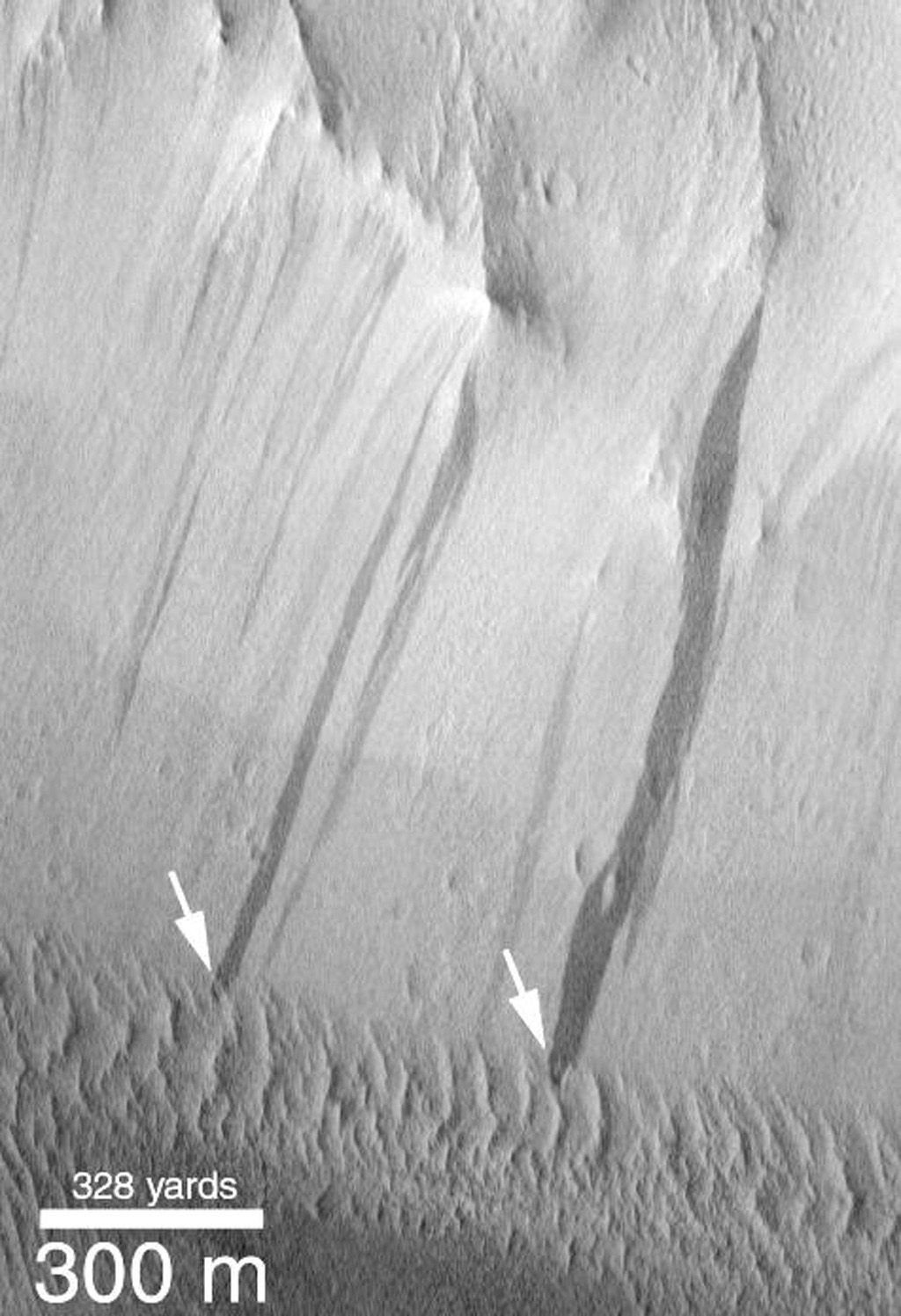 NASA's Mars Global Surveyor shows small windblown dunes at the base of a slope in Lycus Sulci on Mars that have been over-ridden by more recent dark streaks (arrows).