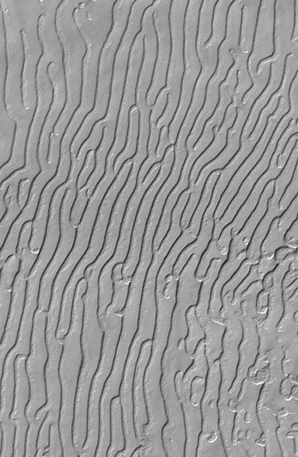 Some portions of the martian south polar residual cap have long, somewhat curved troughs instead of circular pits. This image was captured by NASA's Mars Global Surveyor (MGS) on Aug. 4, 1999.