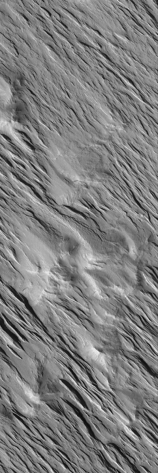 NASA's Mars Global Surveyor shows yardangs, a ridge-and-groove landform produced by wind erosion of a granular, sand-rich bedrock. These are located west-southwest of the volcano, Olympus Mons on Mars.