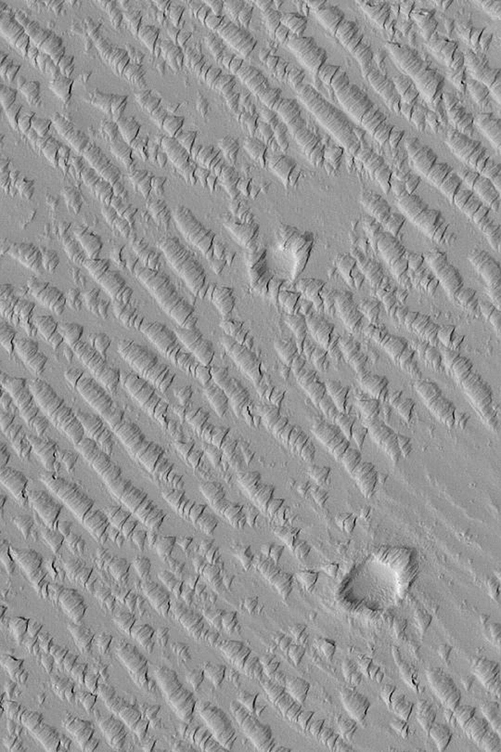 NASA's Mars Global Surveyor shows a suite of wind-sculpted ridges on the plains northwest of the Tharsis volcano, Ascraeus Mons on Mars. Two circular features are old meteor impact craters.