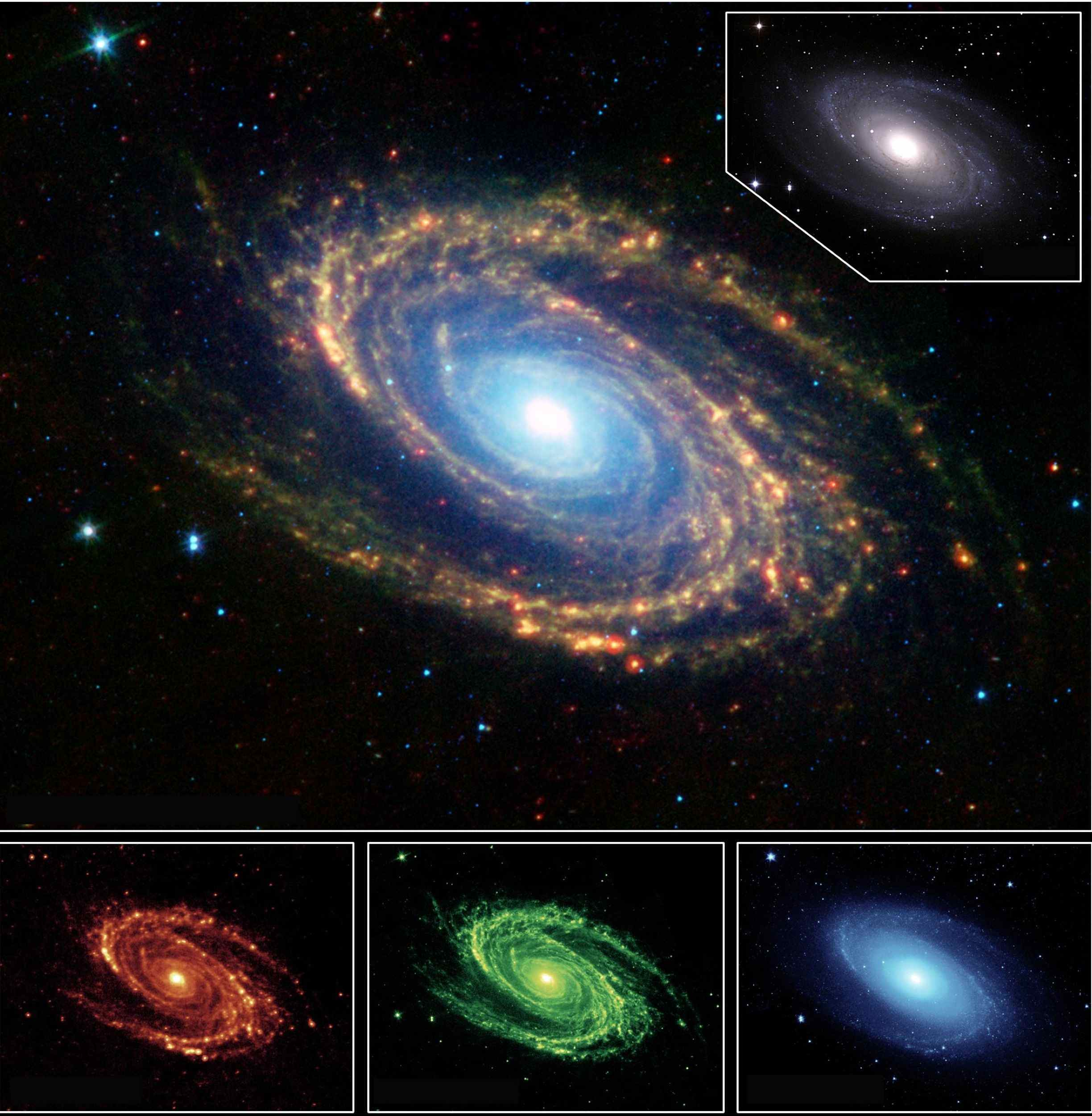The magnificent spiral arms of the nearby galaxy Messier 81 are highlighted in this image from NASA's Spitzer Space Telescope.