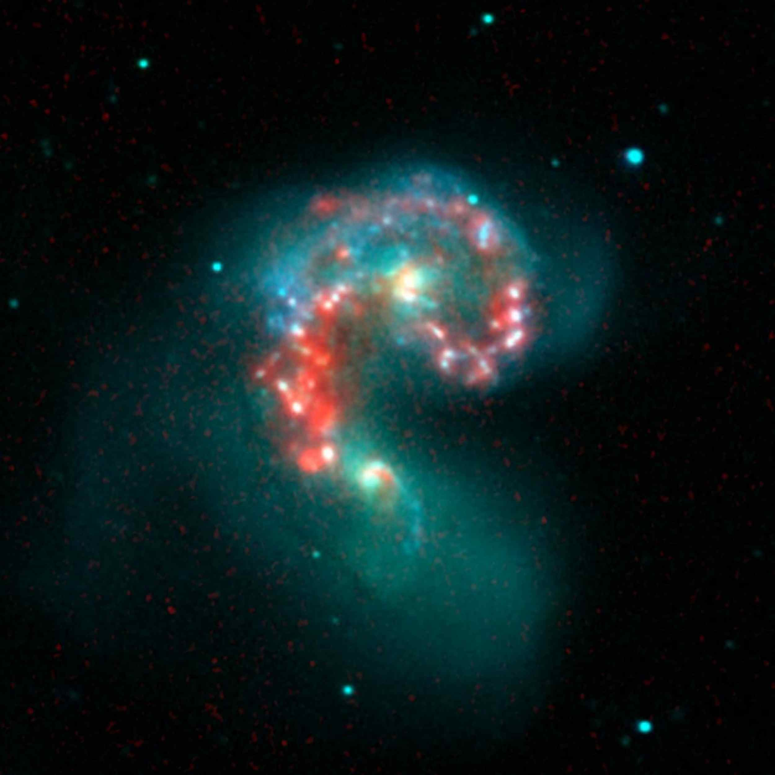 This false-color image from NASA's Spitzer Space Telescope reveals hidden populations of newborn stars at the heart of the colliding 'Antennae' galaxies. These two galaxies are known individually as NGC 4038 and 4039.