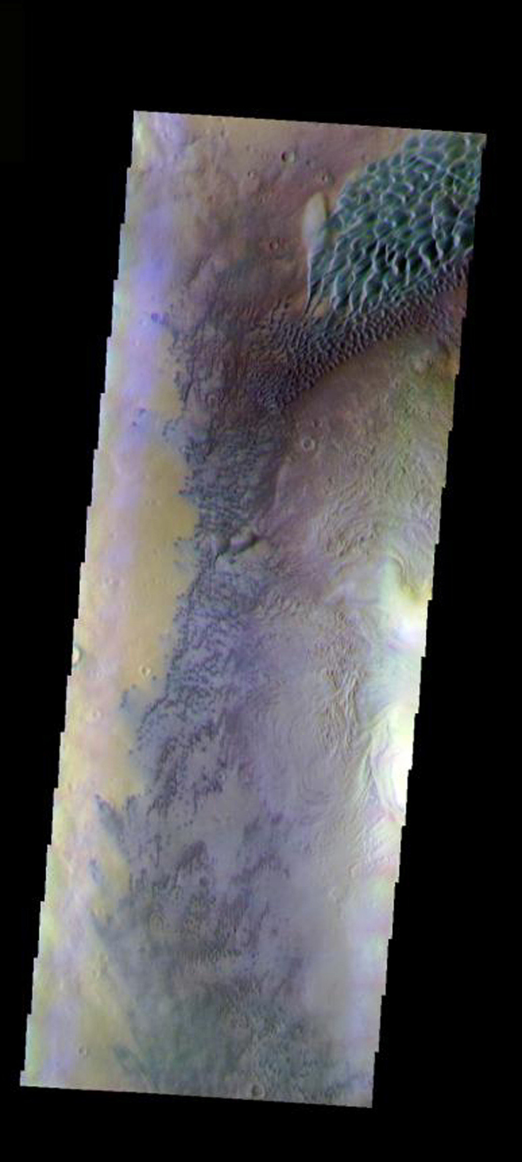 This false-color image from NASA's Mars Odyssey spacecraft shows part of the interior of Moreux Crater on Mars. The crater peak is at the right edge of the image. Many dunes and a dunefield are also evident.