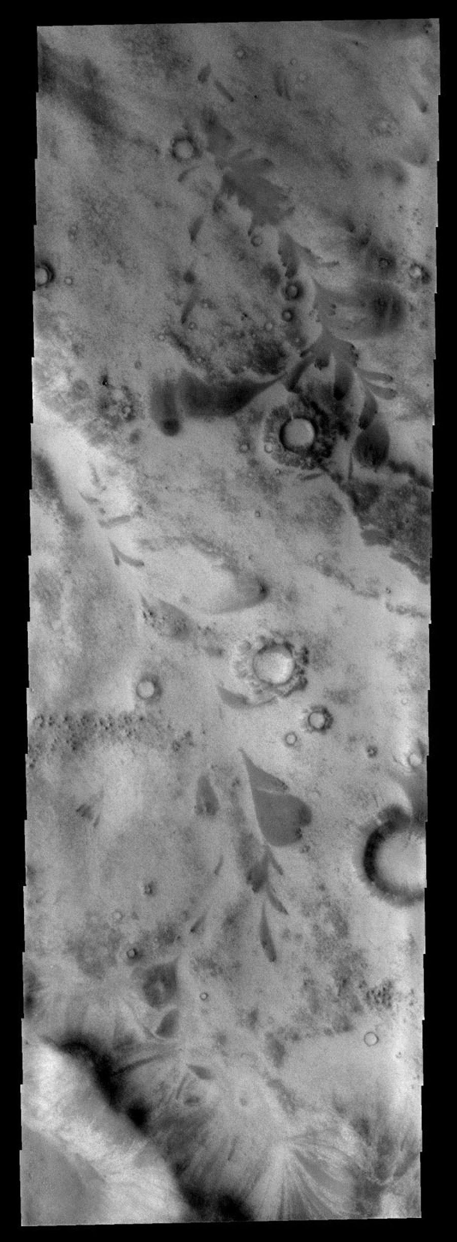 This image from NASA's Mars Odyssey spacecraft shows an area just outside Mars' south polar cap region. The dark leaf-shaped features are material moving down slope and then down valley.