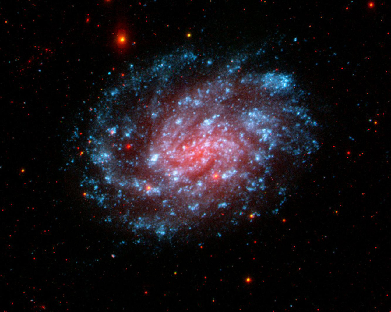 This image from NASA's Galaxy Evolution Explorer shows the galaxy NGC 300, located about seven million light-years away in the constellation Sculptor. It is a classic spiral galaxy with open arms and vigorous star formation throughout.