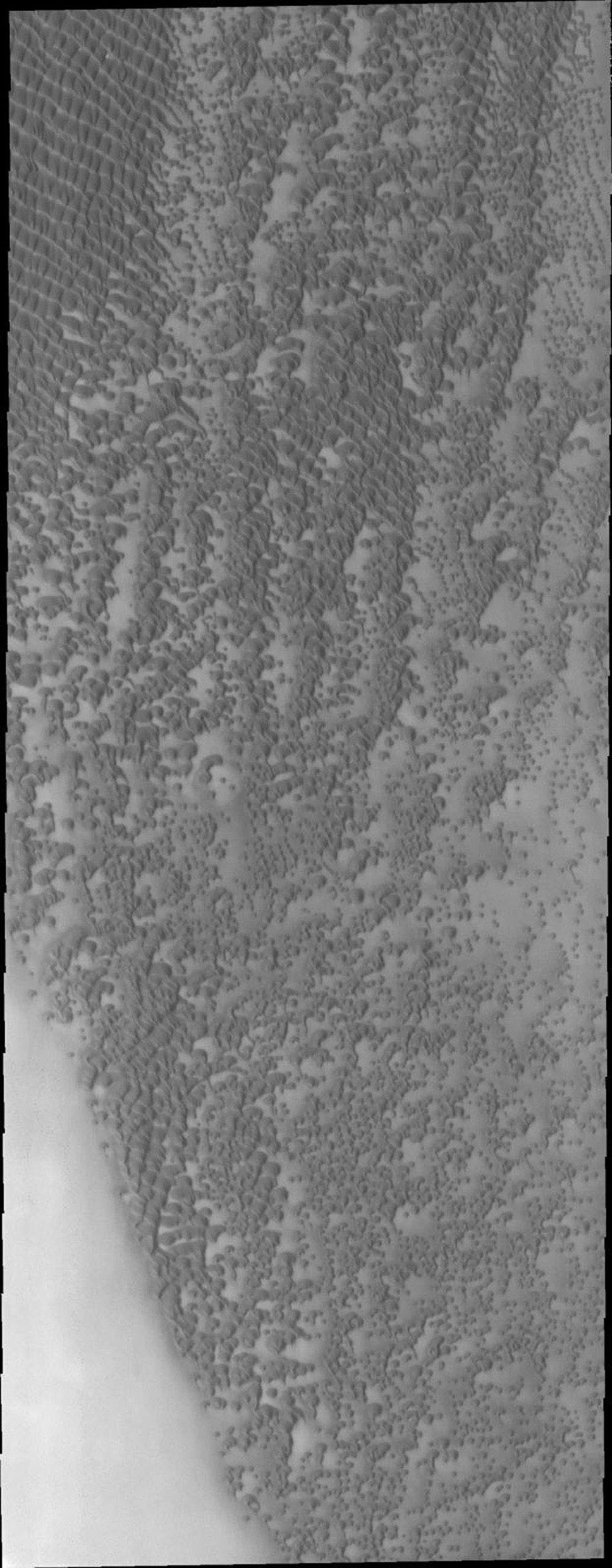 This image from NASA's Mars Odyssey shows a small part of Mars' north polar sand sea, or erg. In this region individual dunes are coalescing into large dune groups.