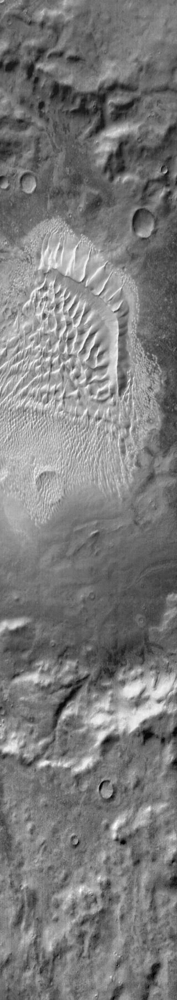 This image from NASA's Mars Odyssey shows a complex dune field located on the floor of Russell Crater on Mars. The bright tone indicates the warmth of the dunes compared to the surrounding materials.