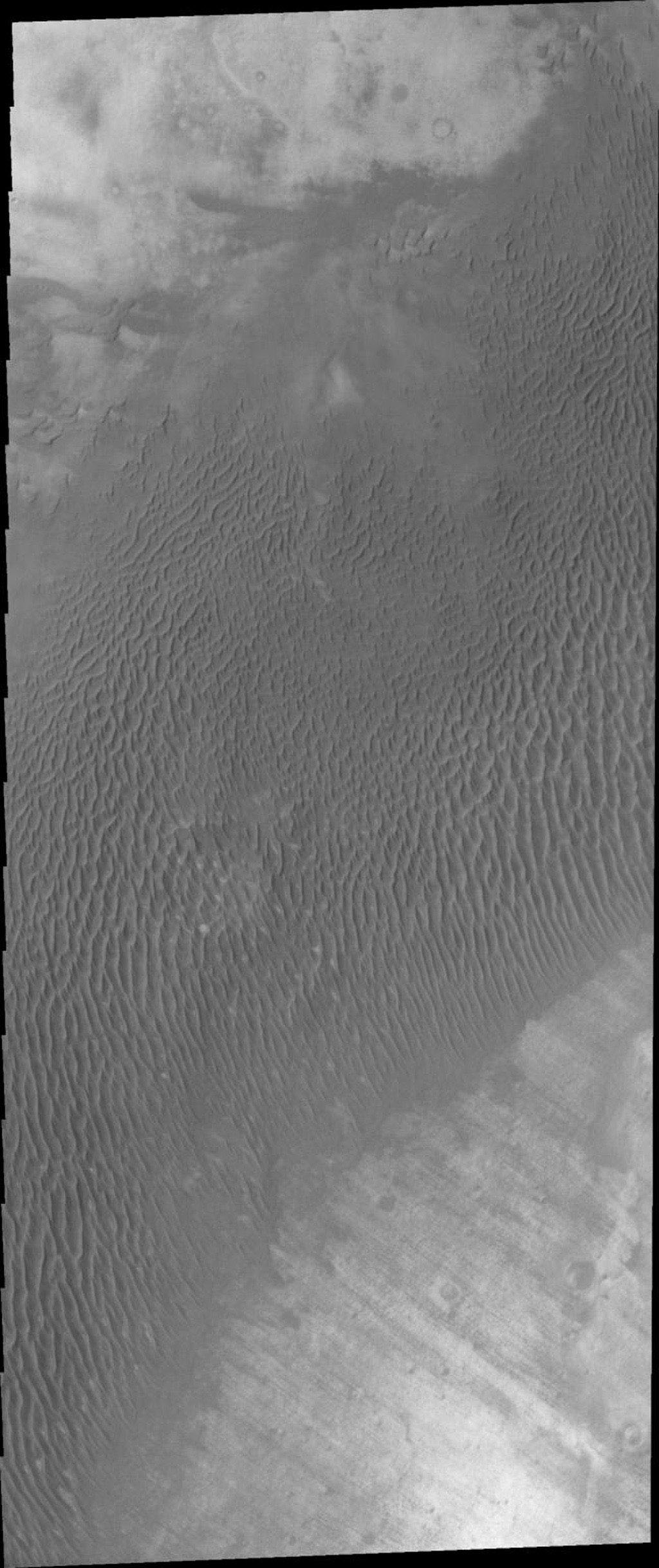 This image from NASA's Mars Odyssey shows a dune field located on the plains of Terra Cimmeria on Mars.