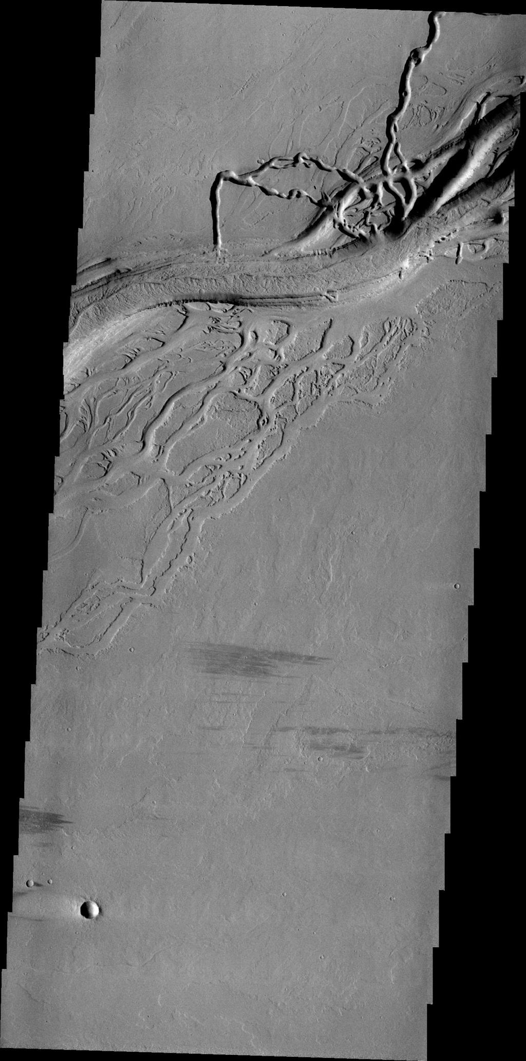 This image from NASA's 2001 Mars Odyssey shows a complex region of channels in Tharsis. Called Olympica Fossae, these channel forms were created by lava flows rather than water.