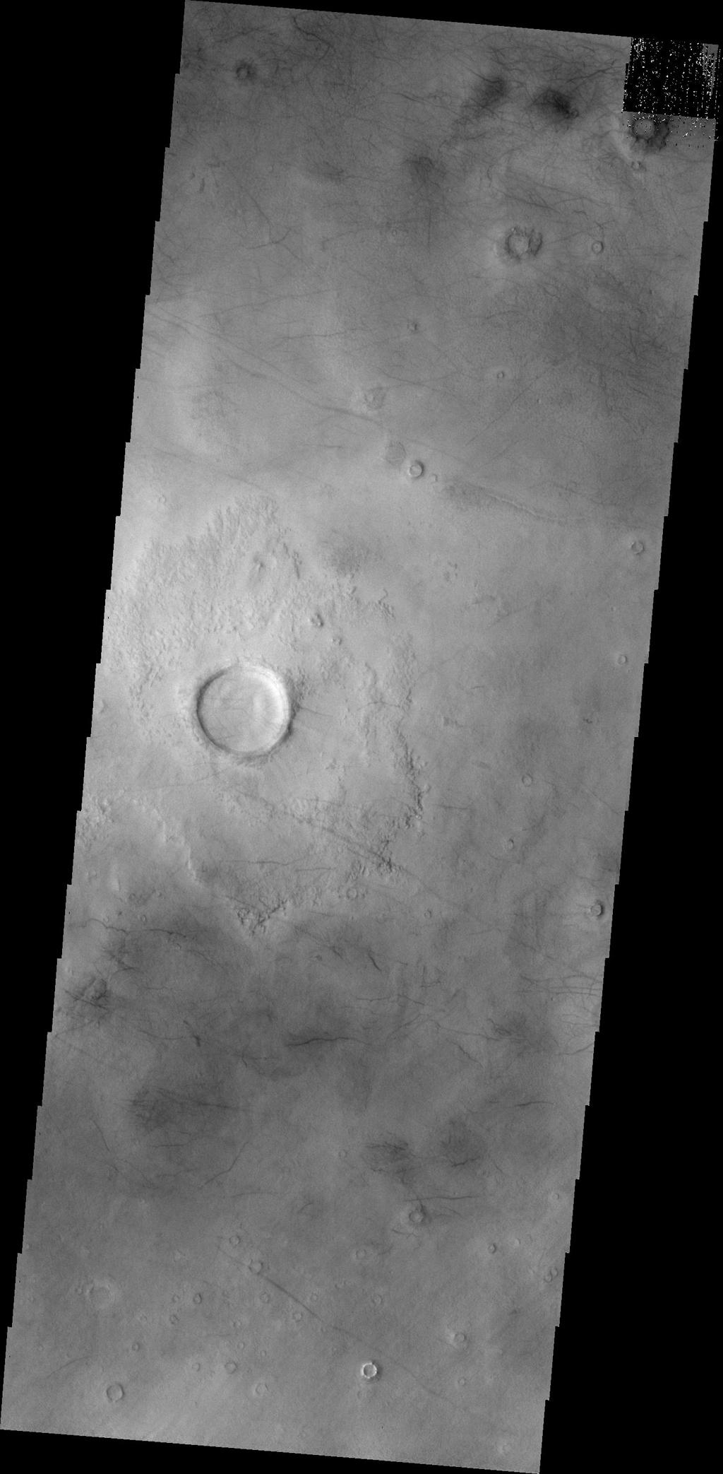 This image from NASA's 2001 Mars Odyssey of central Utopia Planitia shows some dust devil tracks. These features are common in this region of Mars.