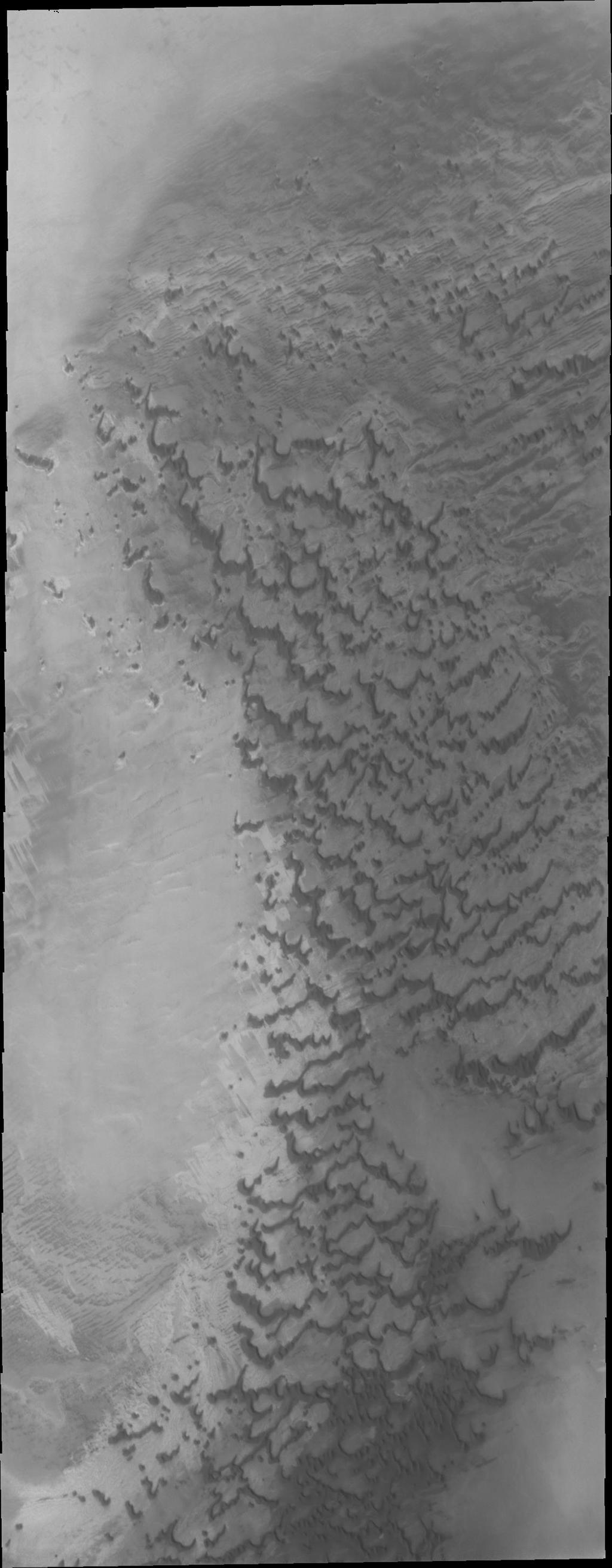 In this image from NASA's Mars Odyssey of dunes near the north pole of Mars it appears that small individual dunes are coalescing into larger dune forms.
