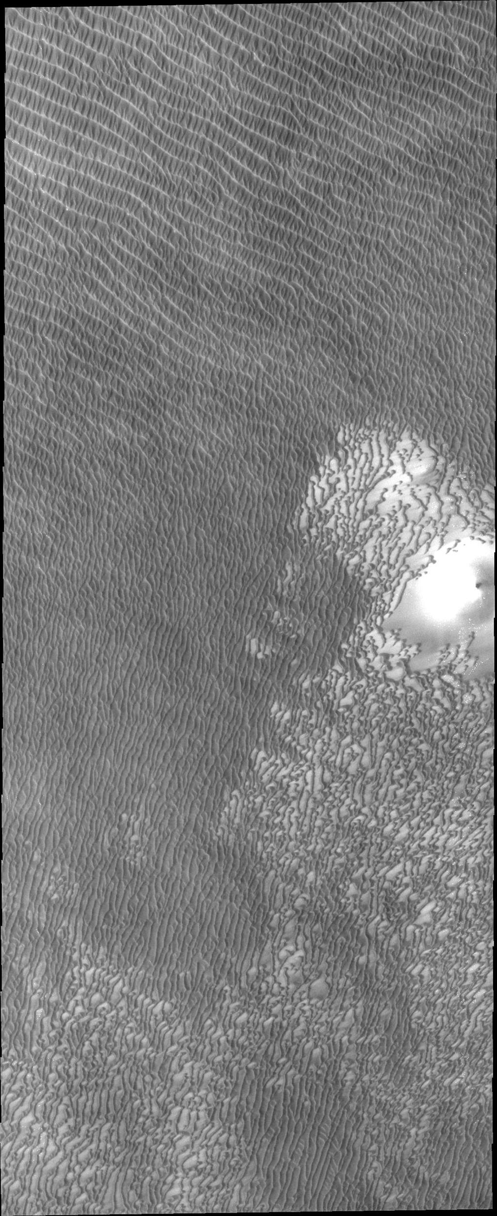 This image from NASA's Mars Odyssey show regions of densely coalesced dunes, common around the North Polar cap of Mars.
