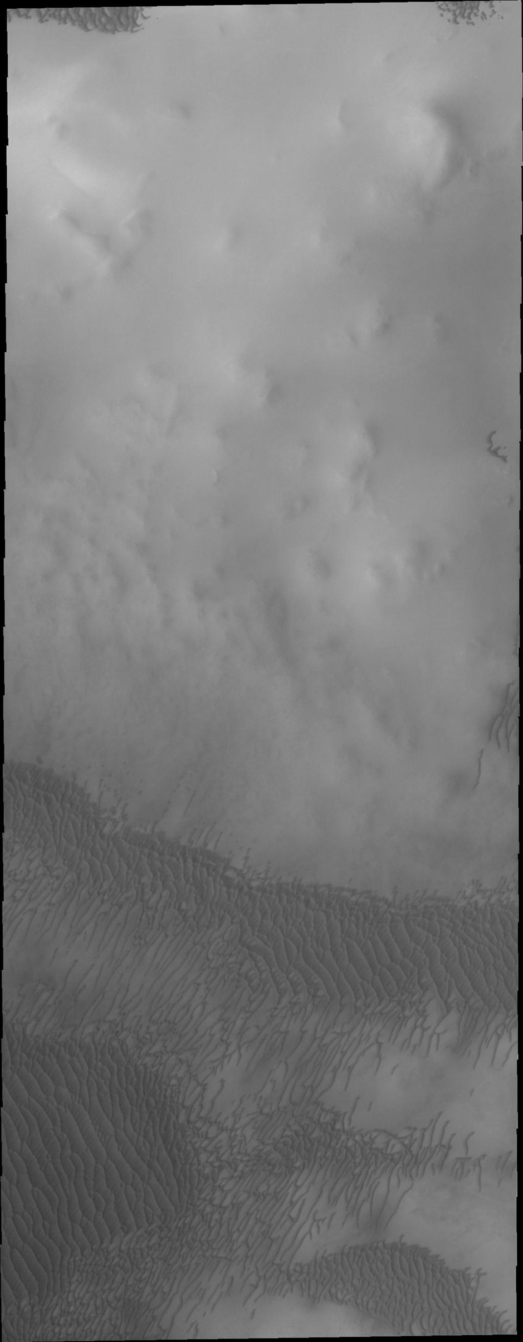 The dunes in this image captured by NASA's Mars Odyssey are near the north polar cap.