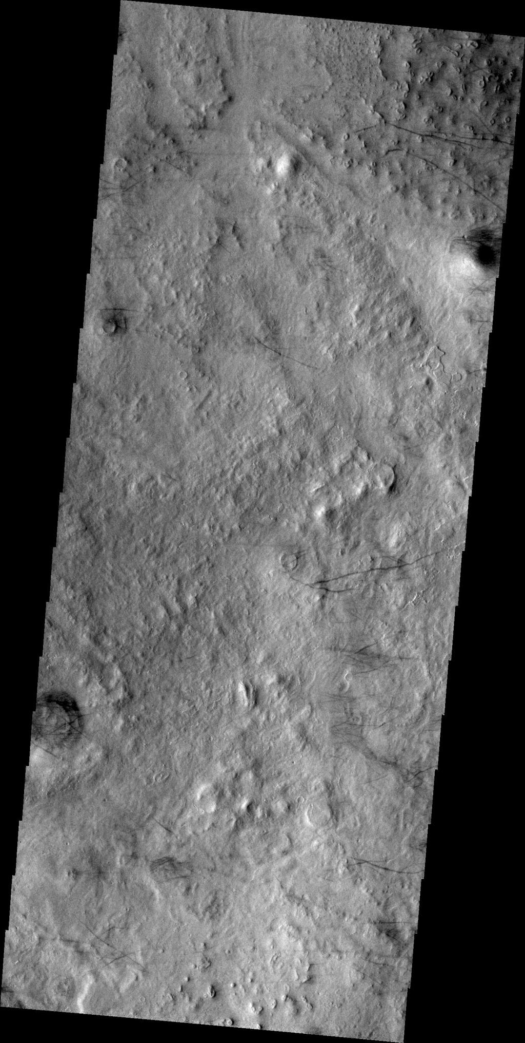 The dark lines in this image from NASA's Mars Odyssey are the tracks of dust devils in this region of Arcadia Plainitia. As the swirling winds move along the surface, they remove the dust cover, revealing the darker rock beneath.