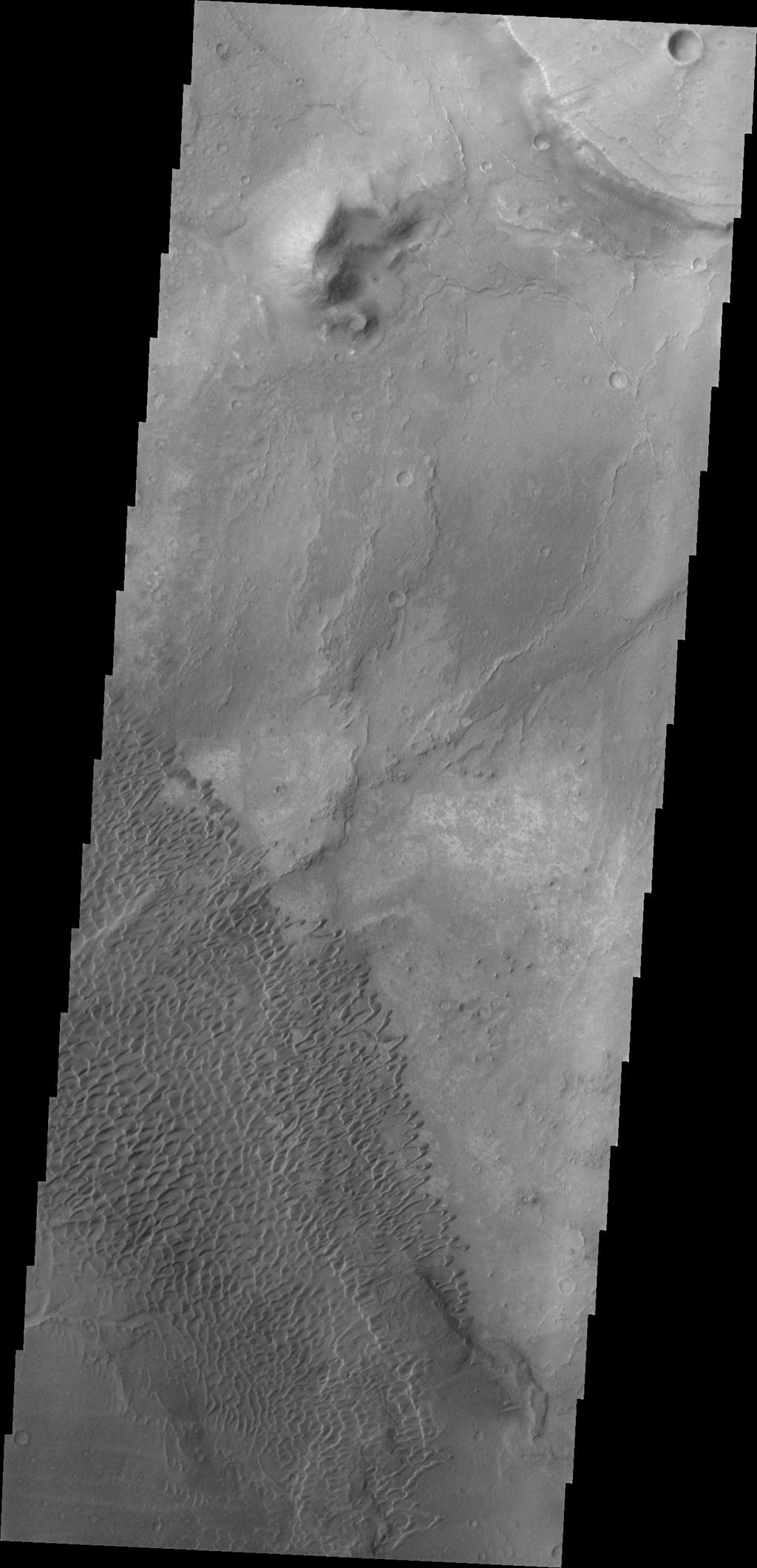 The dunes in this image from NASA's Mars Odyssey are located in Nili Patera, one of the two patera of Syrtis Major Planum.