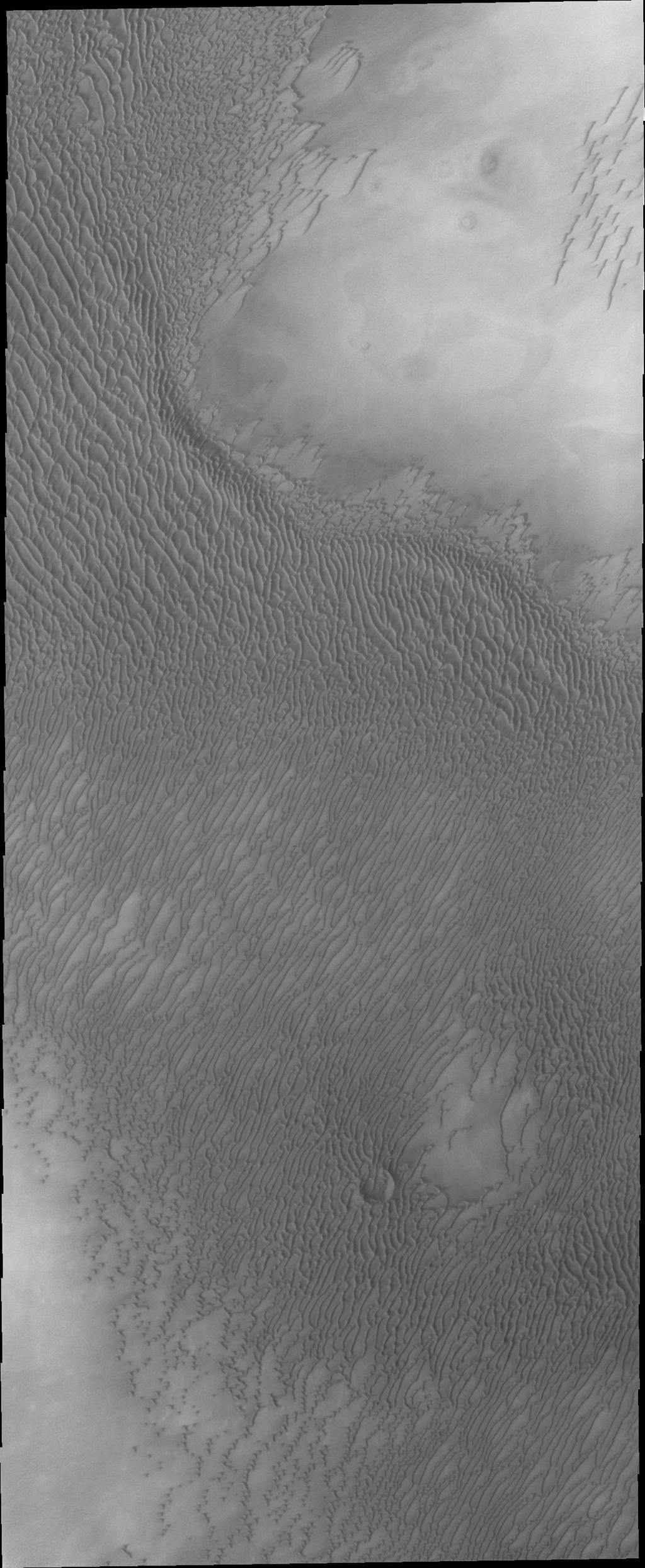 The appearance of the dunes in the North Polar Erg (or sand sea) changes as the seasons move from winter to summer. This summer image from NASA's Mars Odyssey shows the dunes totally free of frost.