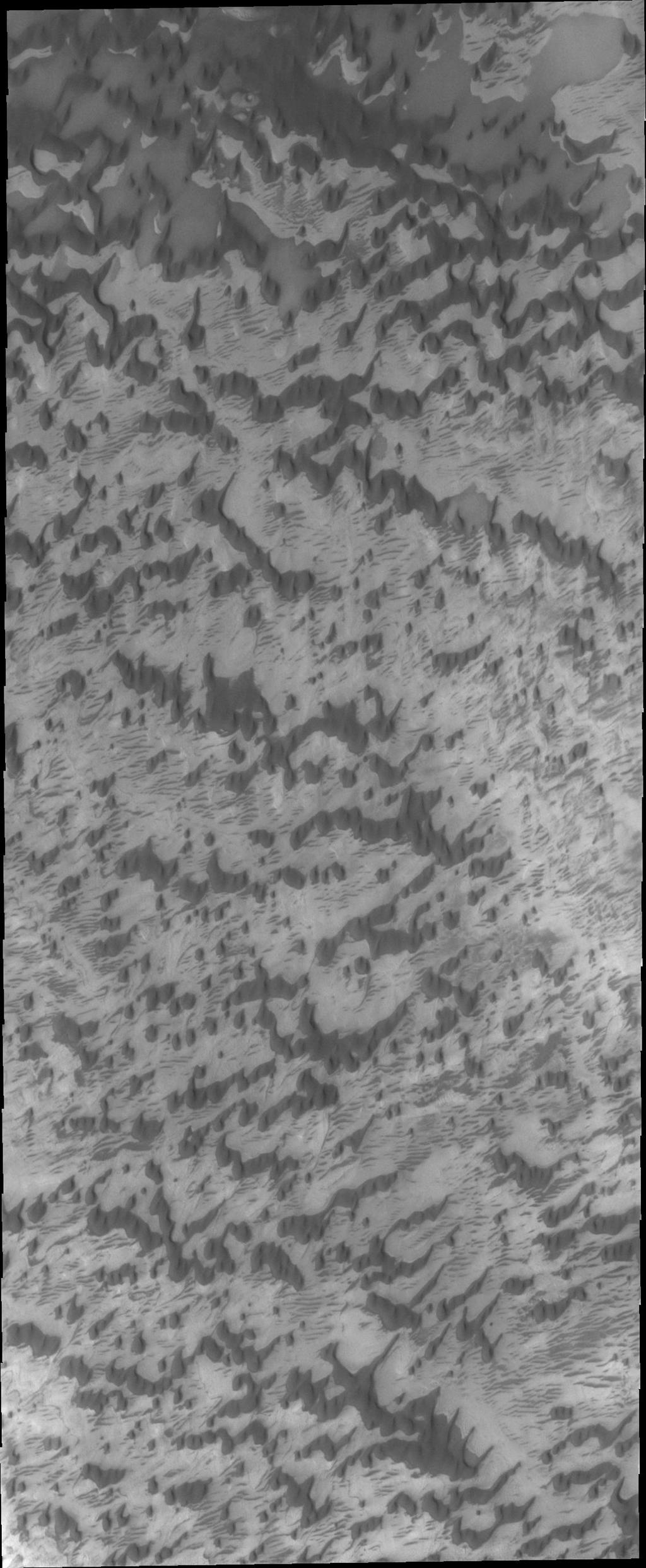 As the sun warms the surface and more frost is removed, the dunes and other features near the north pole of Mars are revealed. This image from NASA's Mars Odyssey shows that the inter-dune areas are complex.