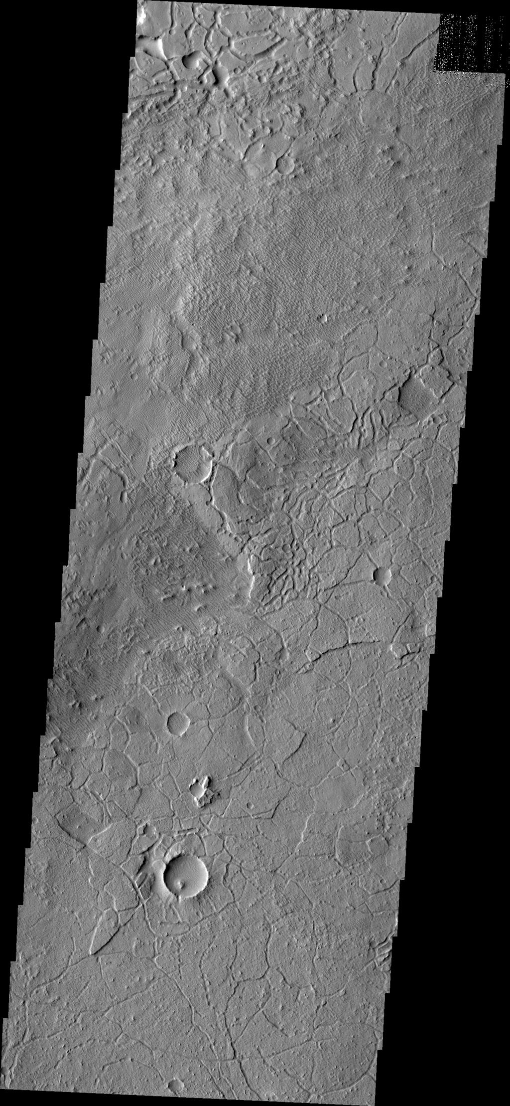 Avenus Colles is a region of 'hills' separated by arcuate fractures. These features are the margin between the southern highlands and Elysium Planitia to the north. This image was captured by NASA's Mars Odyssey.