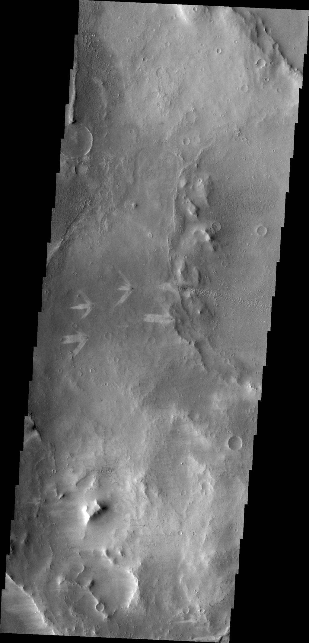 The triple tails of windstreaks behind these small craters in Arabia Terra indicate multiple wind directions in the area in this image from NASA's Mars Odyssey.