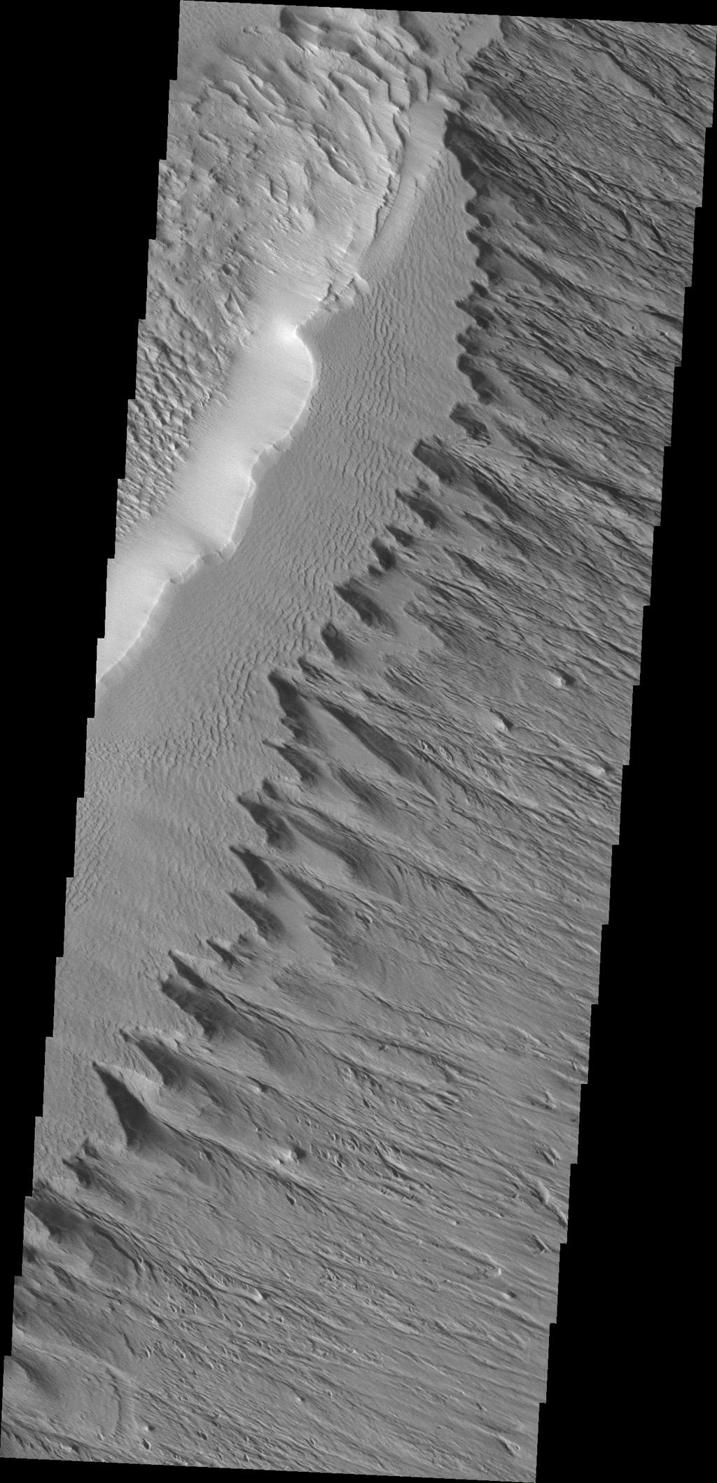 This ridge of material on the northern end of Gordii Dorsum is being reduced in size by the erosive effect of the wind in this image captured by NASA's Mars Odyssey.