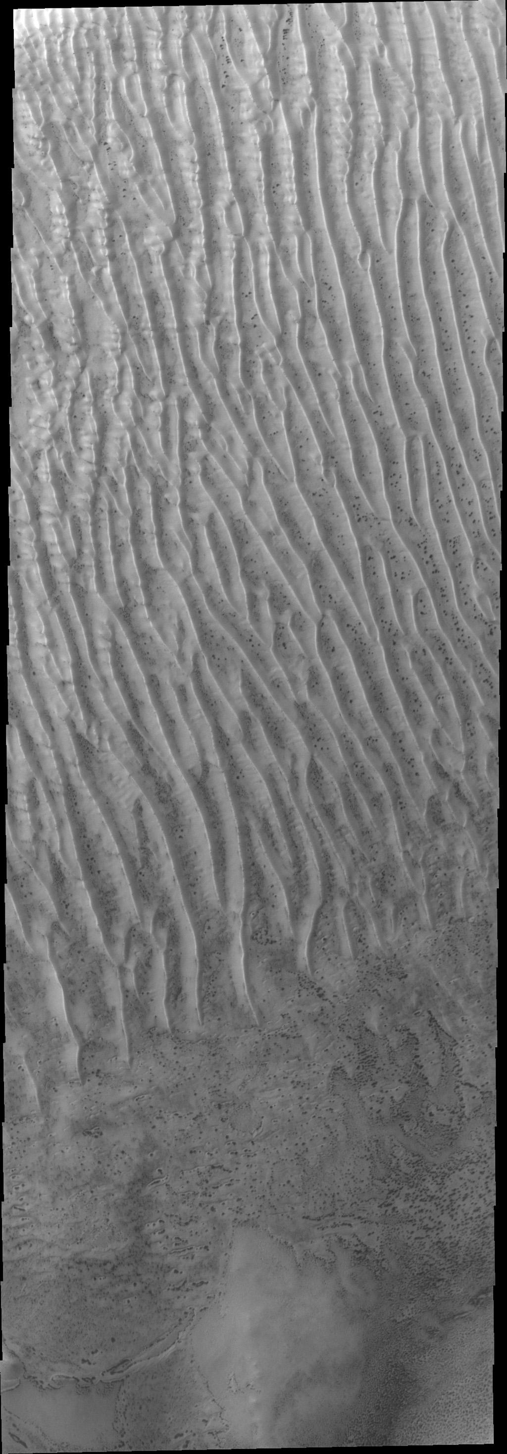 These dunes in Richardson Crater are still frost covered in this image captured by NASA's Mars Odyssey. As spring deepens the frost will sublimate and the dark dunes will appear.