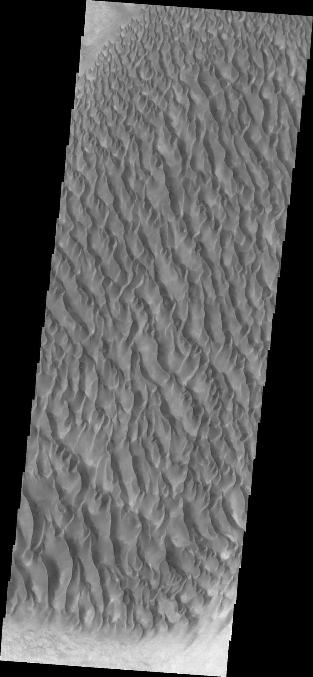 The floor of Proctor Crater is host to this sand sheet and its surface dune forms in this image captured by NASA's Mars Odyssey.