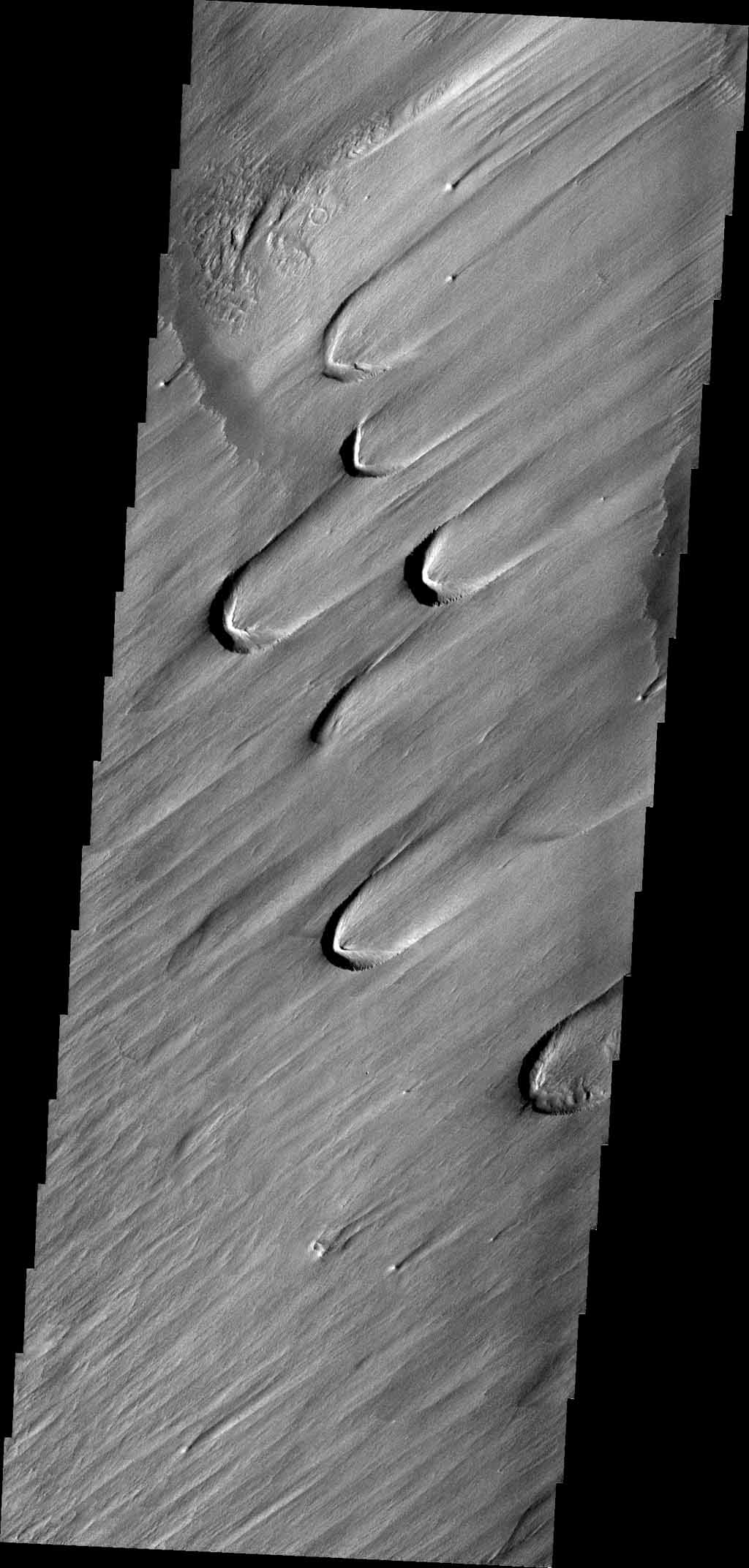 On Earth, these wind-derived features are called 'blowouts,' where the force of the wind has carved out a crescent-shaped depression in soft, uncemented material like glacial loess. This image is from NASA's Mars Odyssey.