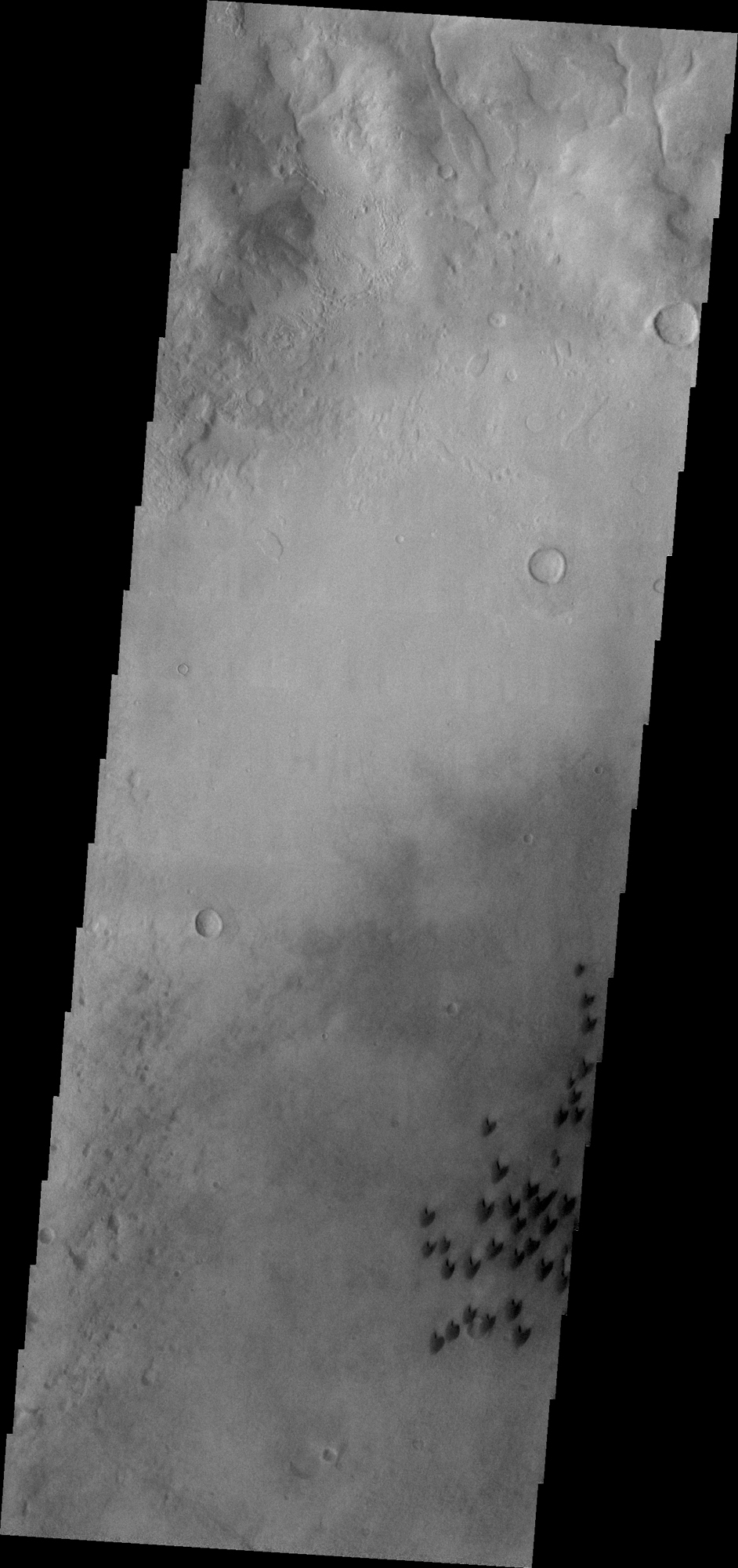 Individual dunes are seen on the floor of Arkhangelsky Crater in Noachis Terra by NASA's Mars Odyssey.