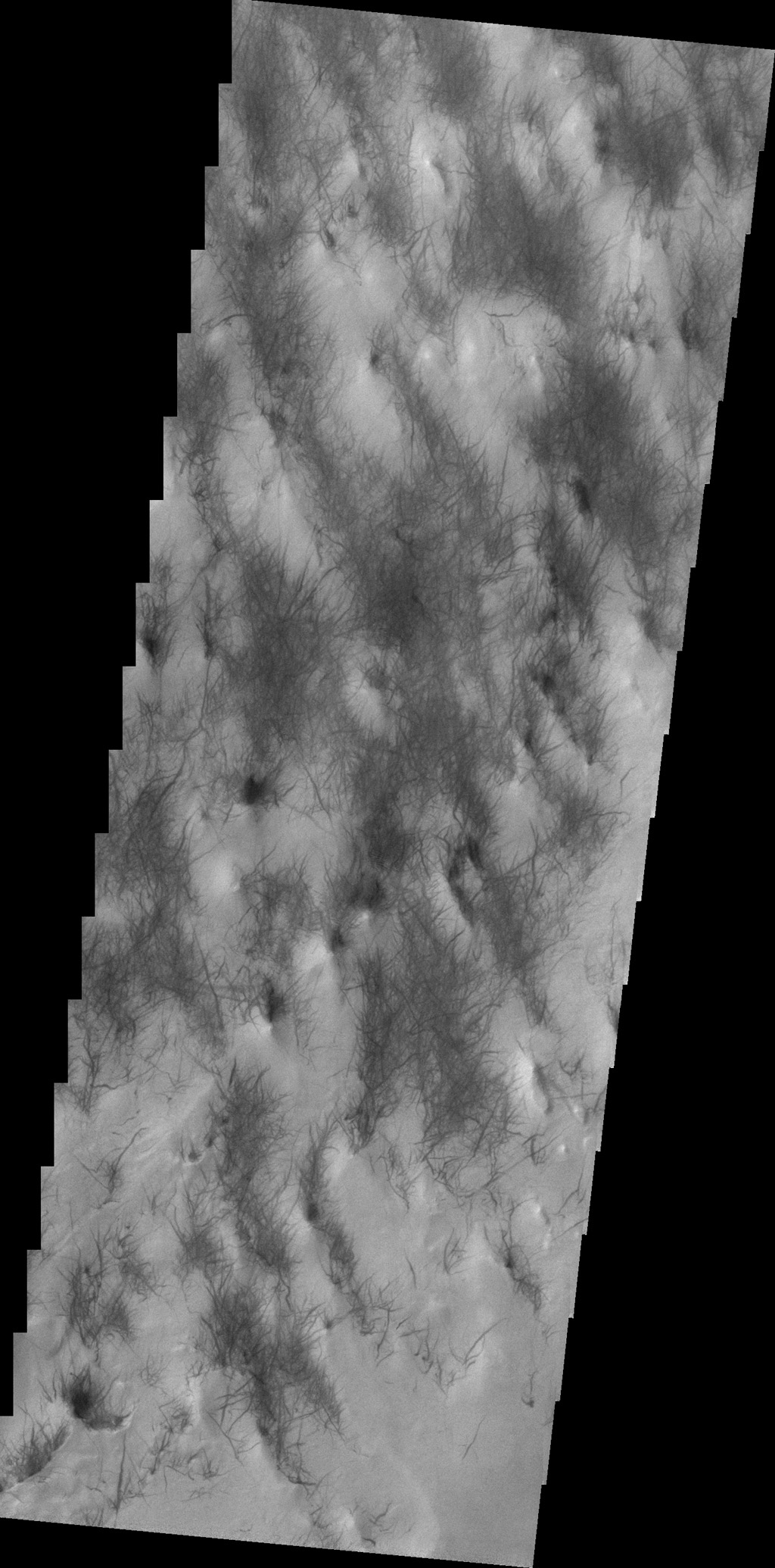 The dust devil tracks seen in this image from NASA's 2001 Mars Odyssey spacecraft are located in Argyre Planitia.
