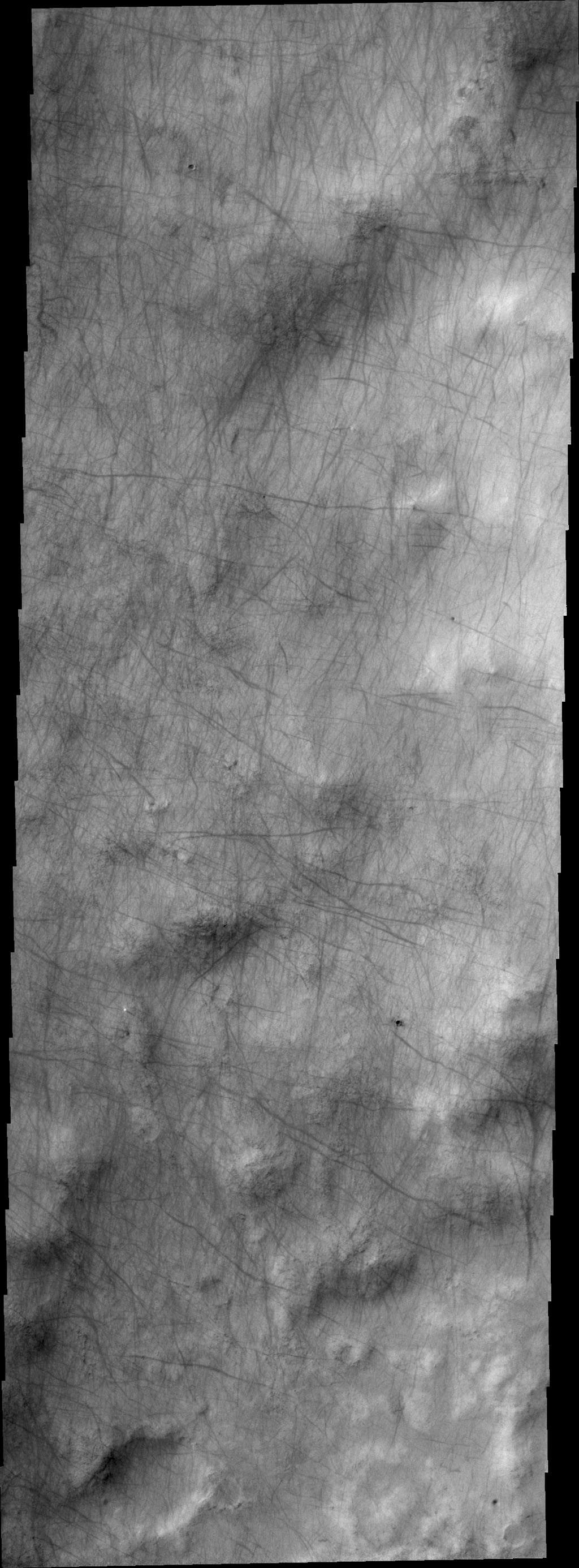 Dust devil tracks criss-cross the surface in this image captured by NASA's 2001 Mars Odyssey spacecraft.