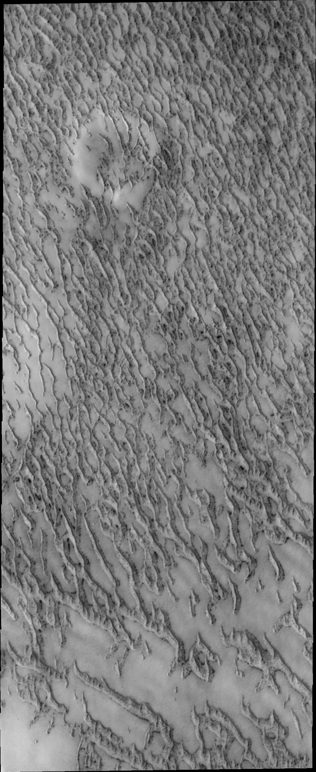More dunes are encountered surrounding the north polar cap by NASA's 2001 Mars Odyssey spacecraft.