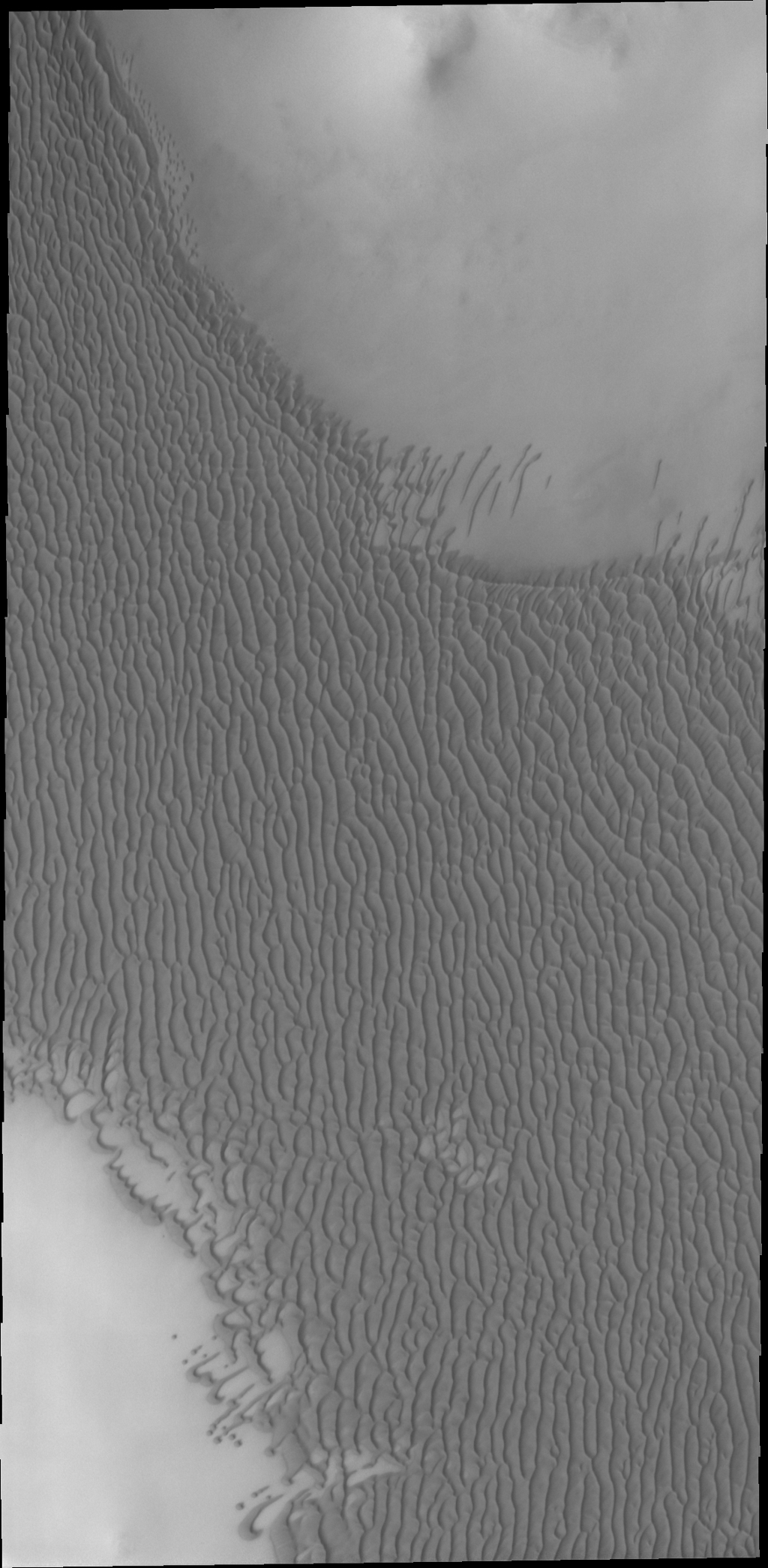 The dunes in this image from NASA's Mars Odyssey spacecraft are part of a large dune field called Olympia Undae, which surrounds part of Mars' north polar cap.