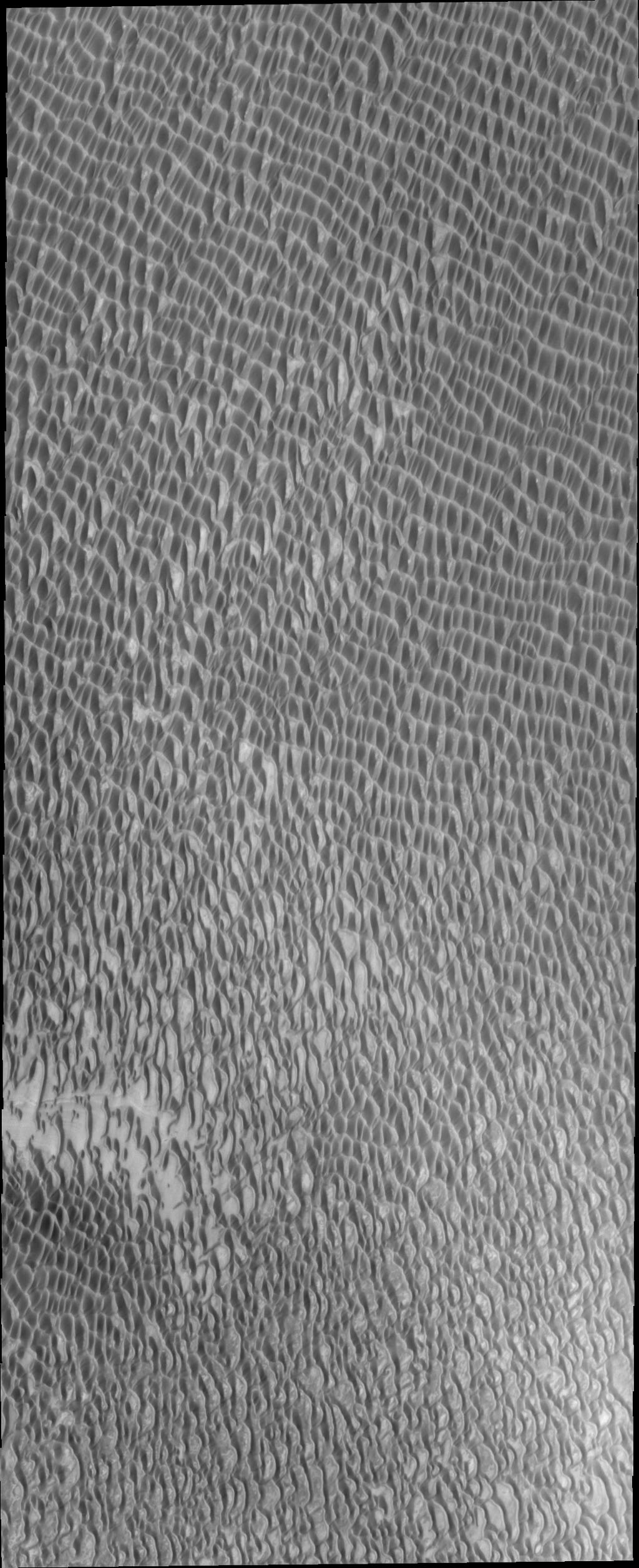 Several regions of this image captured by NASA's Mars Odyssey spacecraft reveal the solid surface the polar dunes are moving across. This surface material appears brighter than the sand dunes on Mars.