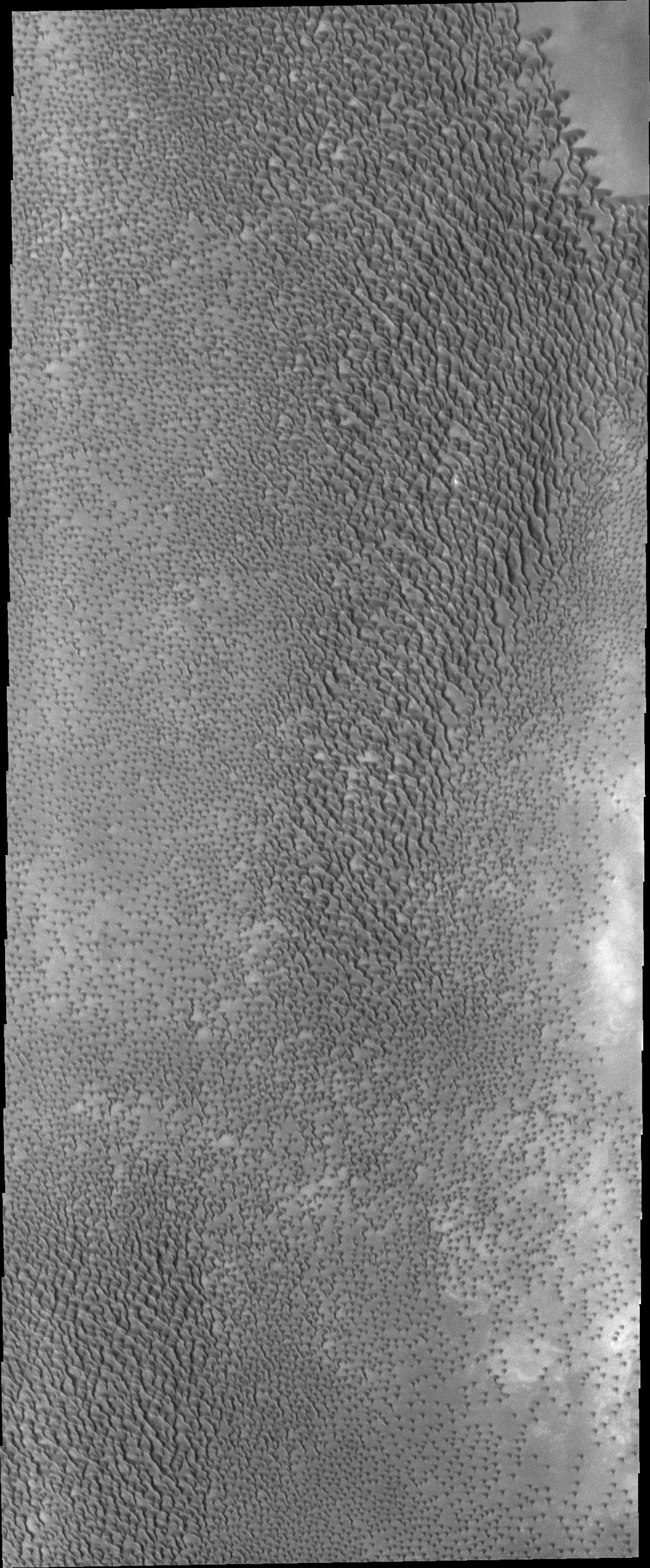 This image from NASA's 2001 Mars Odyssey spacecraft shows part of a dune field near the north polar cap. This is not Olympia Undae, the largest dune field near the north polar cap, but is rather a portion of a smaller dune field further to the east.