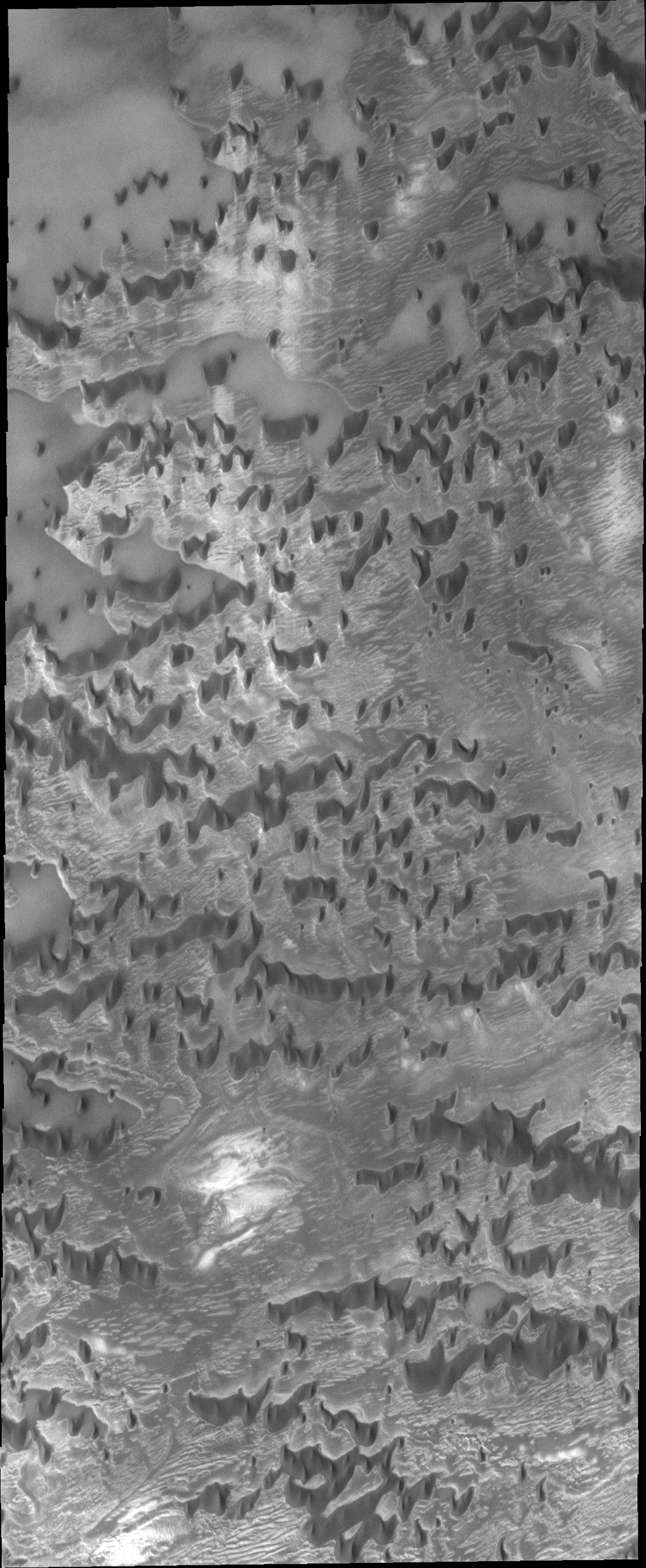 This image from NASA's 2001 Mars Odyssey spacecraft shows a part of Olympia Undae, the largest dune field near the north polar cap. In this region, the dunes are spaced far enough apart to show the detail of the surface they are moving across.