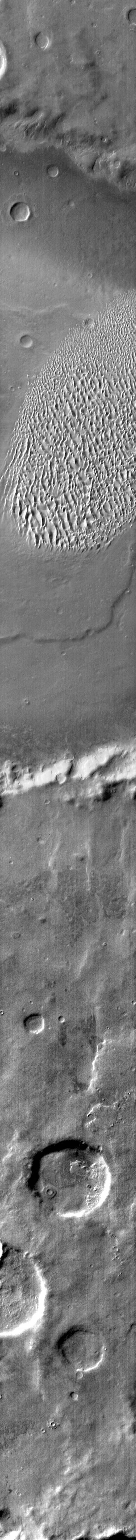 The dunes in this daytime IR image from NASA's 2001 Mars Odyssey spacecraft appear bright because they are warmer than the surrounding crater materials. These dunes are located on the floor of Proctor Crater.