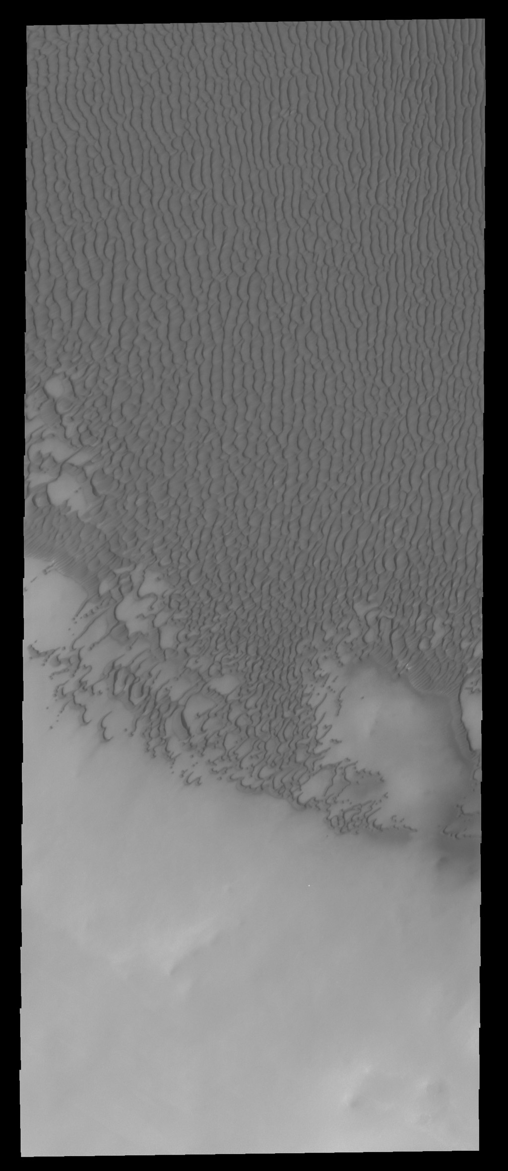 The sand dunes in this image are part of Olympia Undae, a huge sand sea located near the north polar cap as seen by NASA's 2001 Mars Odyssey spacecraft.