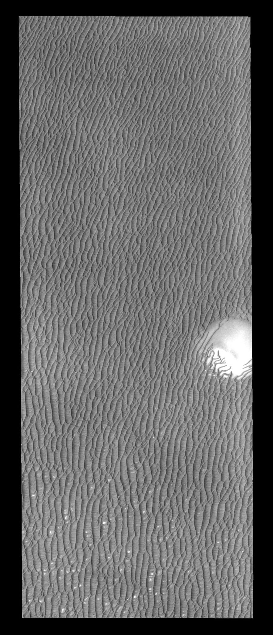 As the season changes from spring to summer, the dunes surrounding the north polar cap become darker and darker as seen by NASA's 2001 Mars Odyssey spacecraft.