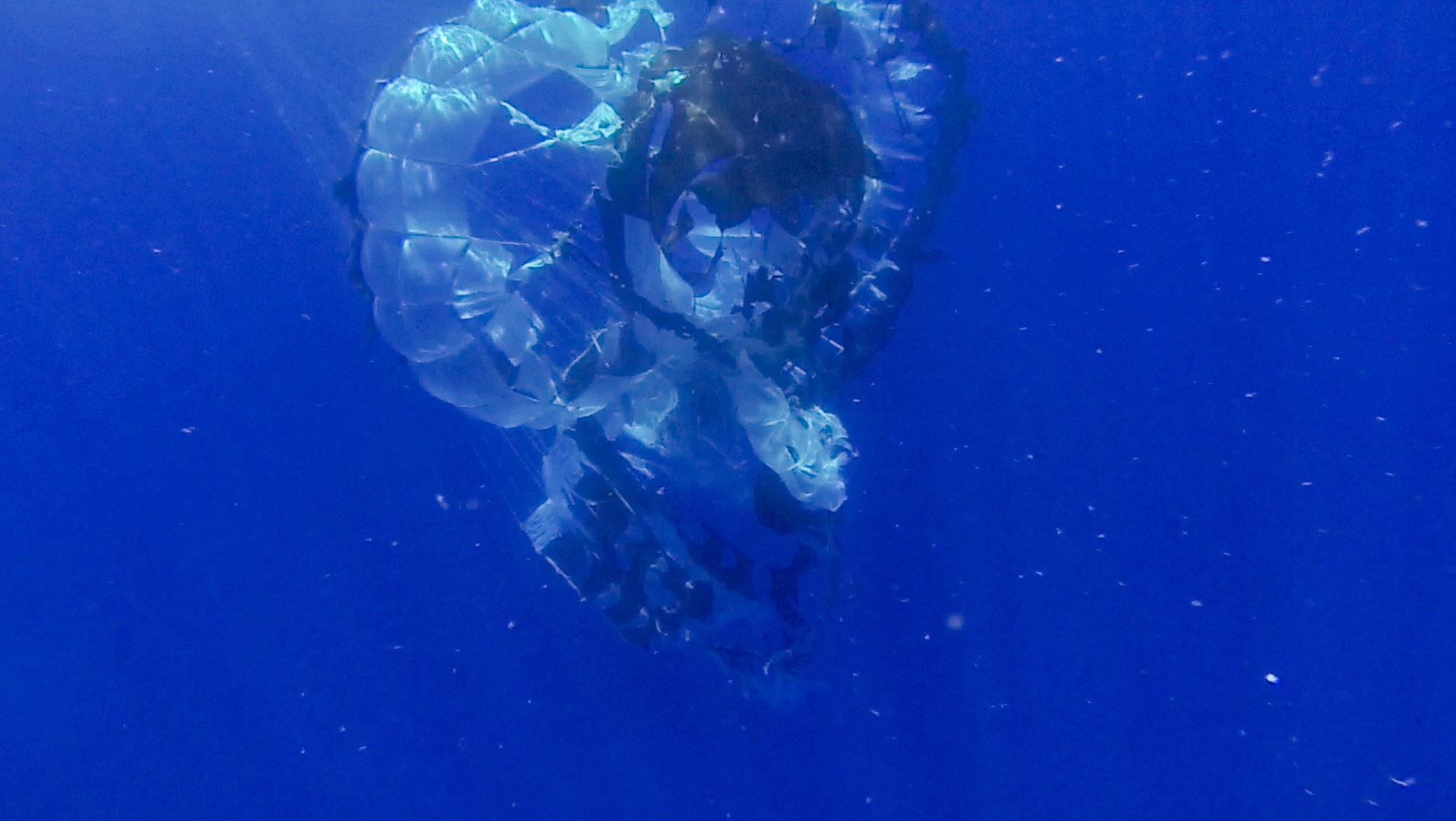 Tears are visible in the parachute from NASA's Supersonic Disk Sail Parachute, which did not deploy as expected. The photo was obtained by Navy divers during recovery of the LDSD test vehicle and parachute.