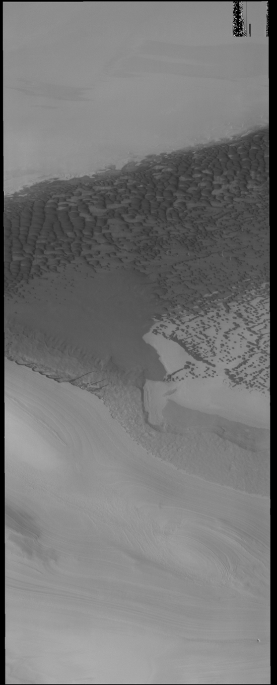 The dark dunes in this image captured by NASA's 2001 Mars Odyssey spacecraft are located in a depression bounded by ice. The polar ice is the bright material at the top and bottom parts of this image.