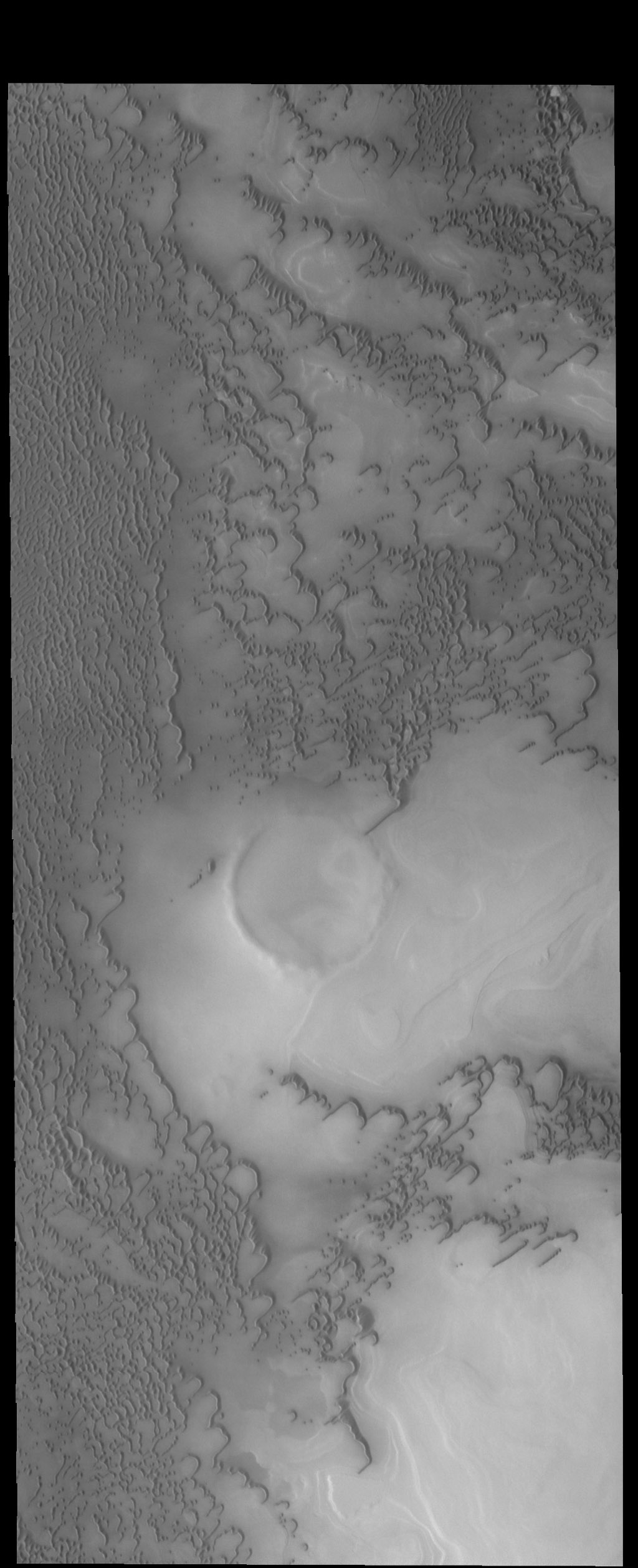 This image from NASA's 2001 Mars Odyssey spacecraft shows more north polar dunes. If you compare multiple dune images, you will see that the dunes can take different forms and cover different amounts of the plains.