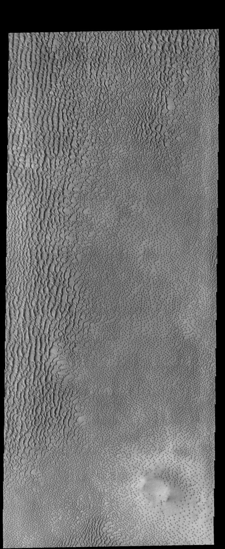 This image captured by NASA's 2001 Mars Odyssey spacecraft shows part of Aspledon Undae, a region of dunes near the north pole. The right side of the image shows hundreds of small, isolated dunes.