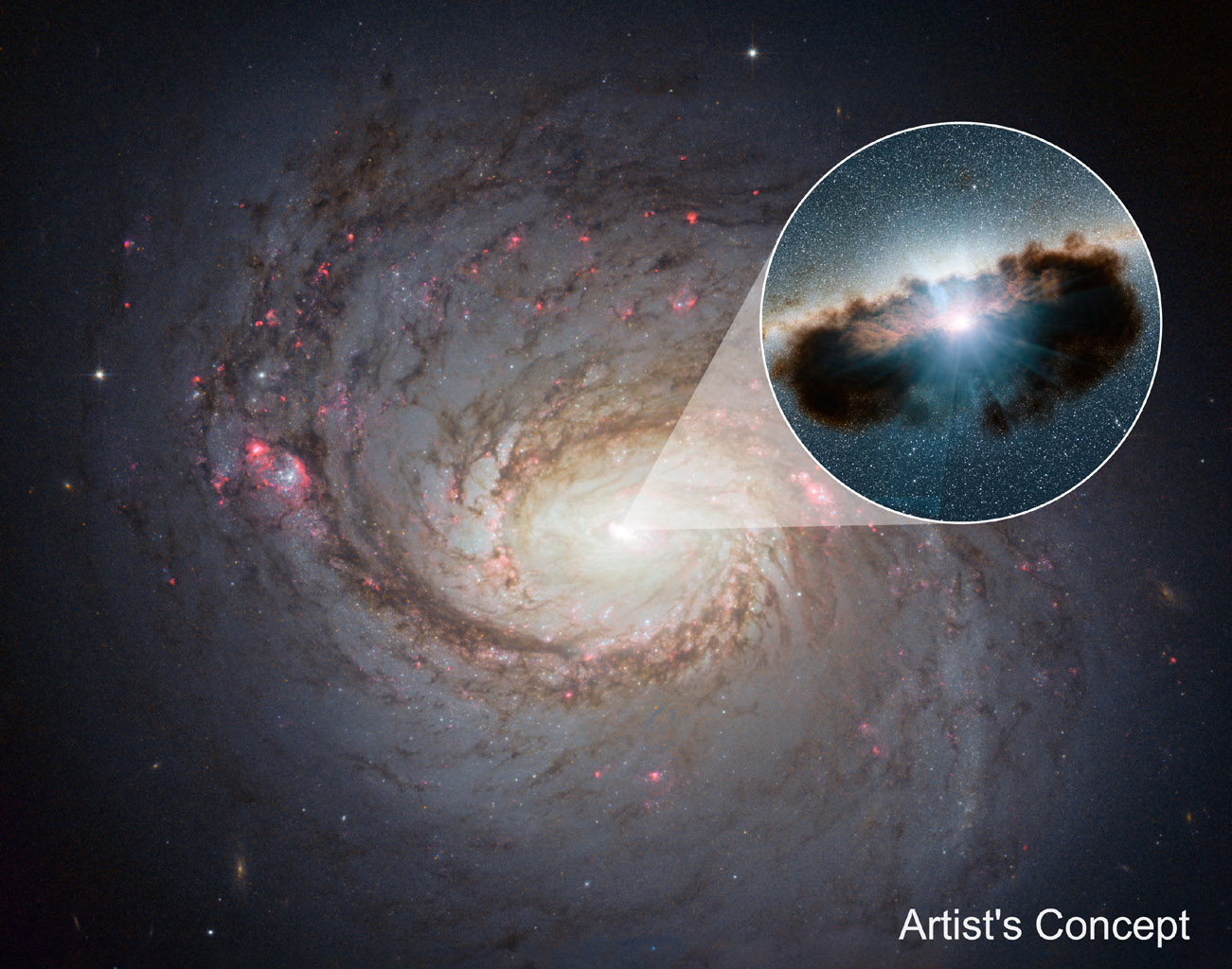 Galaxy NGC 1068 can be seen in close-up in this view from NASA's Hubble