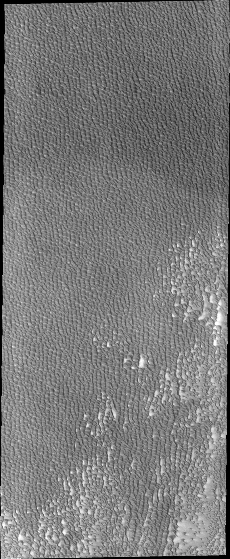 This image from NASA's 2001 Mars Odyssey spacecraft shows Siton Undae, a large dune field located in the northern plains near Escorial Crater on Mars. This image shows part of the central region of the dune field.