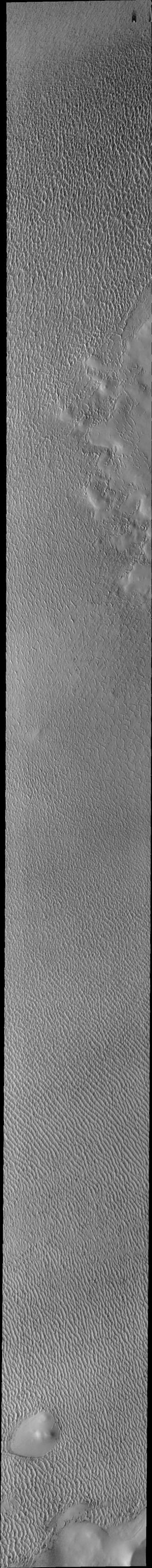 This image captured by NASA's 2001 Mars Odyssey spacecraft of Olympia Undae was collected during north polar spring. The crests of the dunes and other surfaces are light colored, indicative of a frost covering.