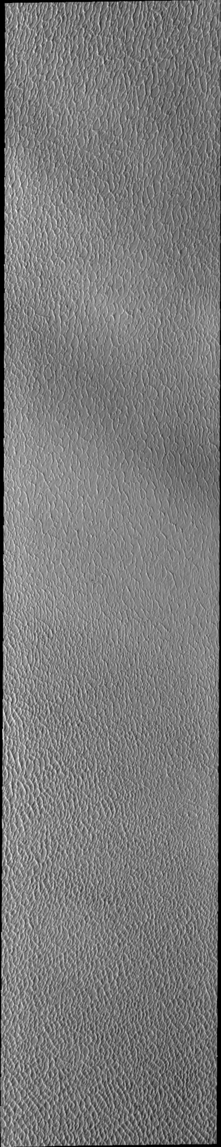 This image of Olympia Undae was collected during north polar spring. The crests of the dunes and other surfaces are light colored, indicative of a frost covering. This image was captured by NASA's 2001 Mars Odyssey spacecraft.