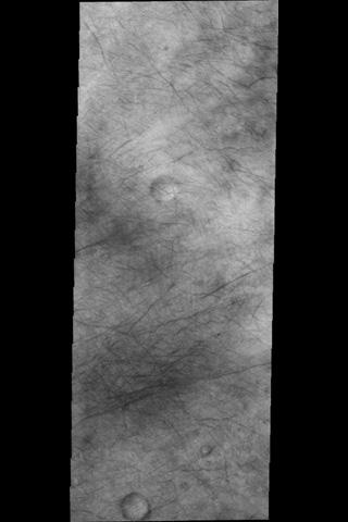 The dust devil tracks in this image are located in Terra Sirenum.